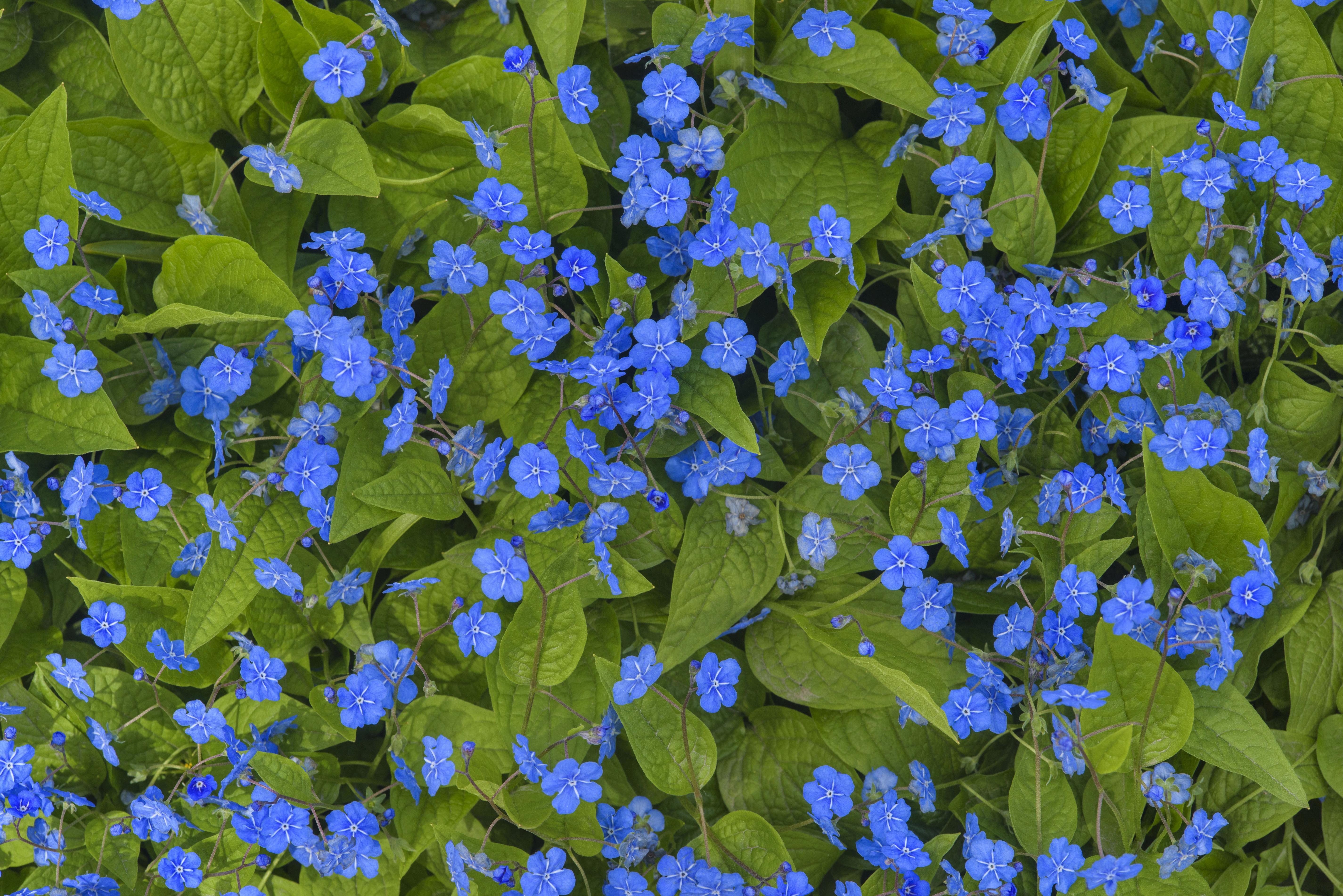 реставрации мелкие голубые цветы названия и фото героев саги
