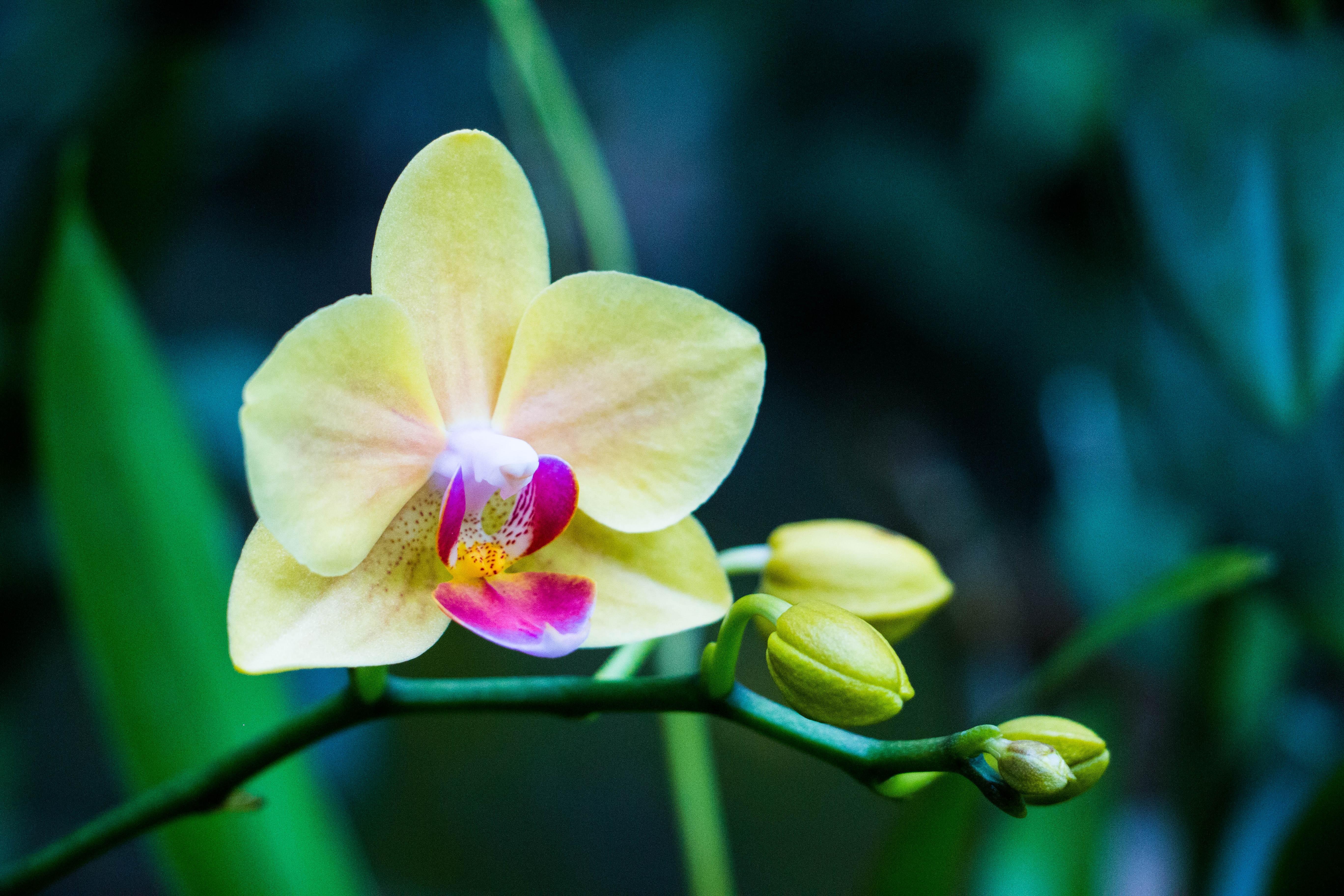 красивое фото желтых орхидей пробегом других регионах