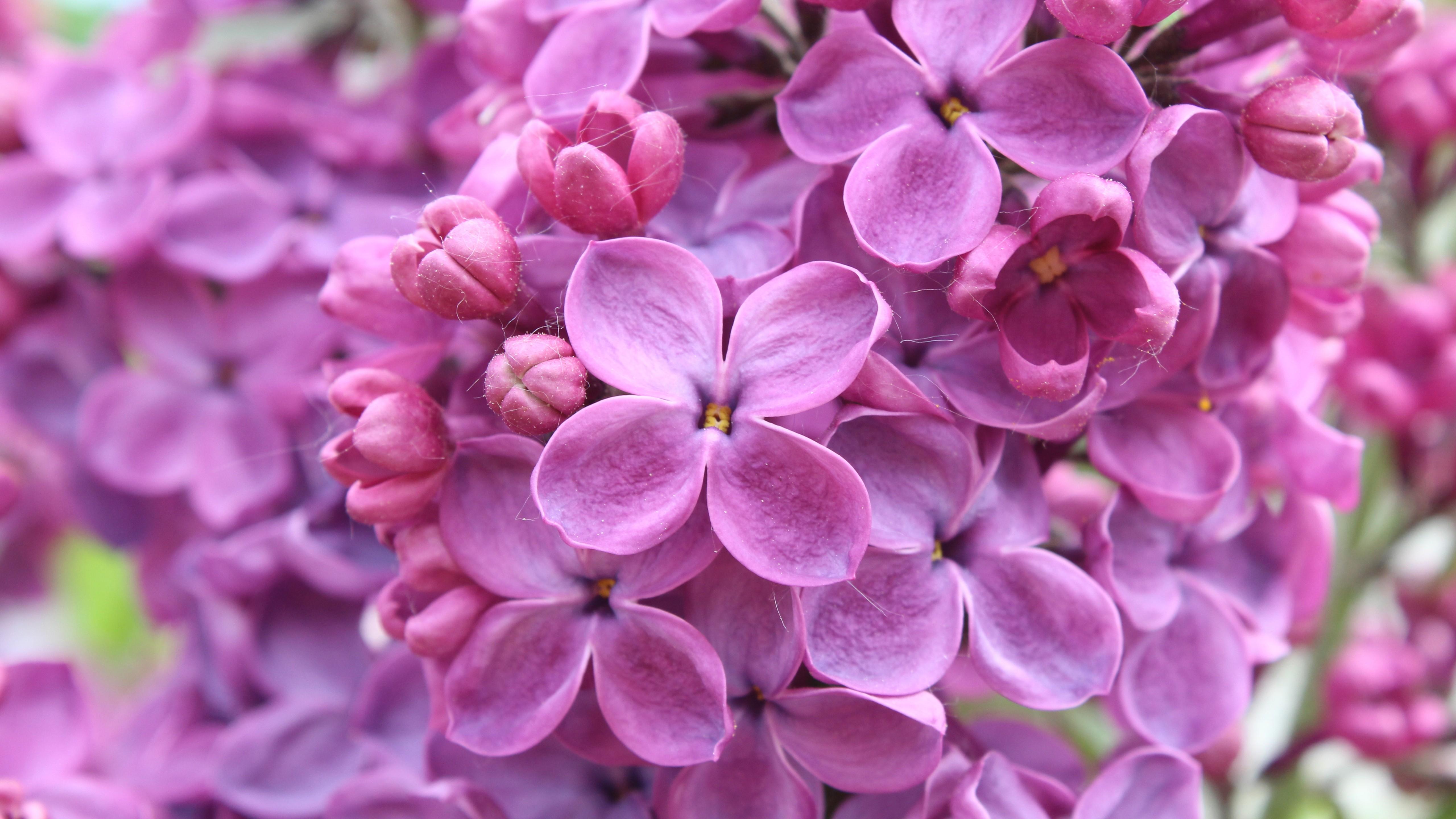 цветы картинки красивые большие размеры борьба велась между