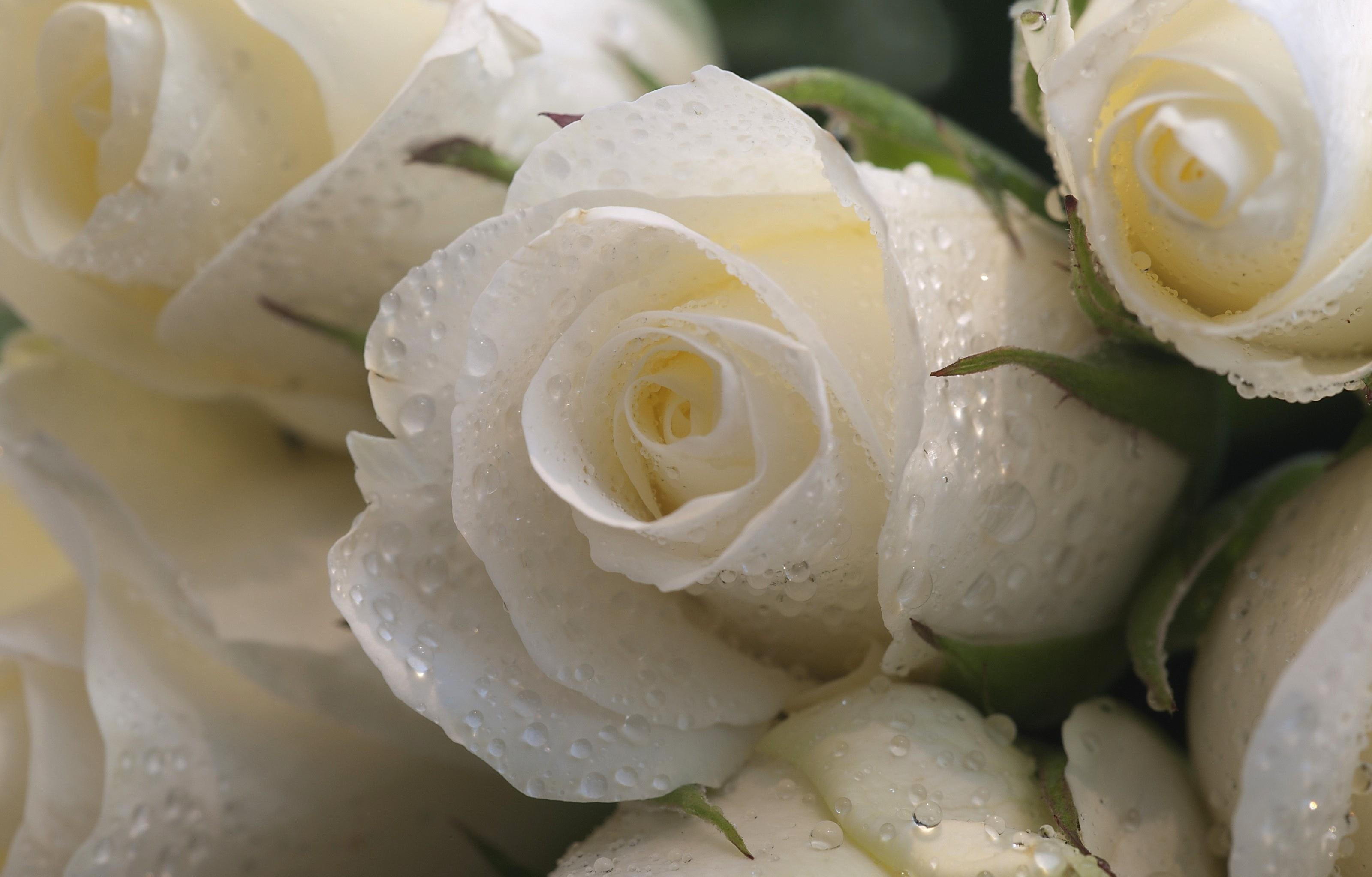 Фото рози джонс полноценного