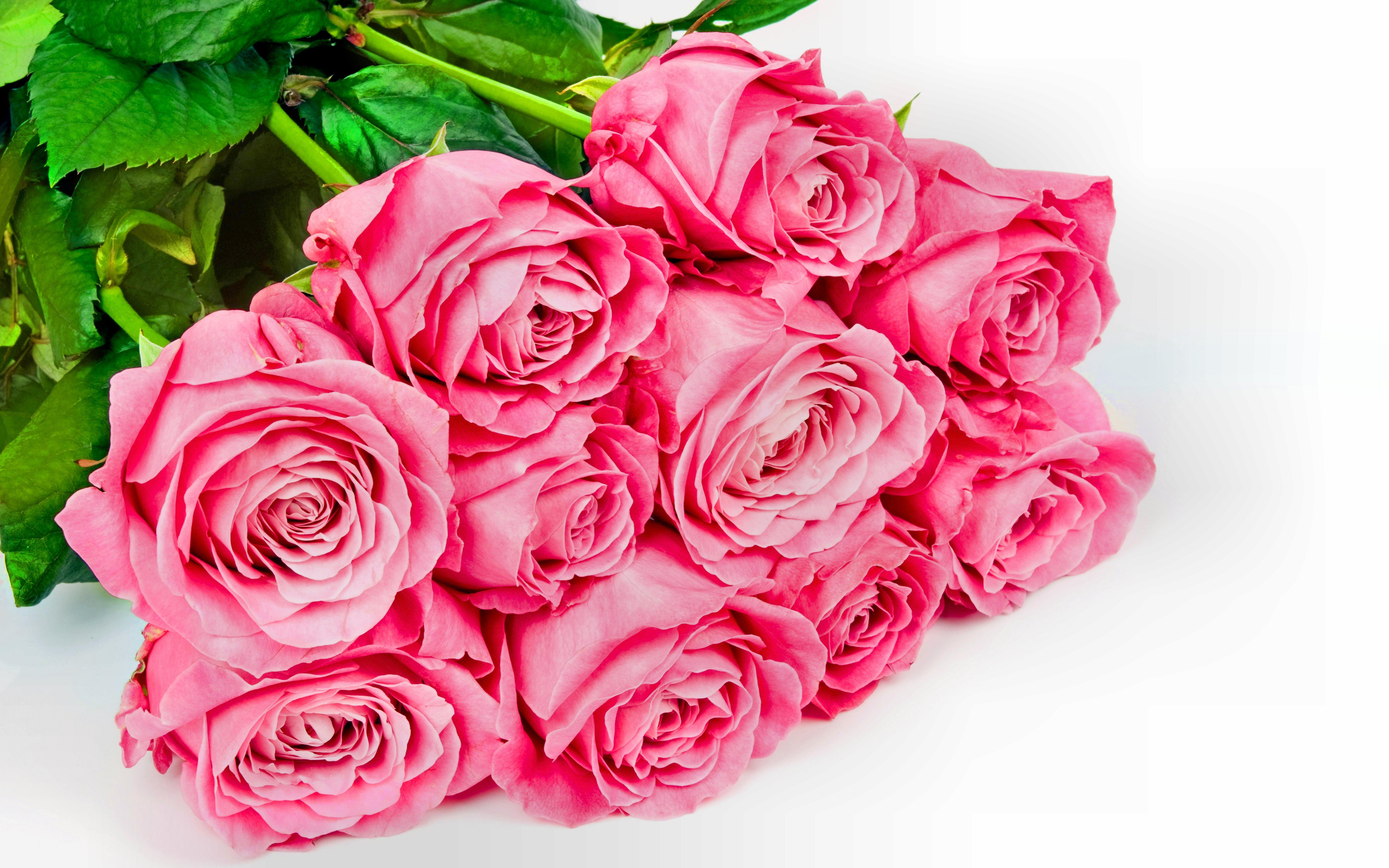 Картинка шикарные розы на белом фоне