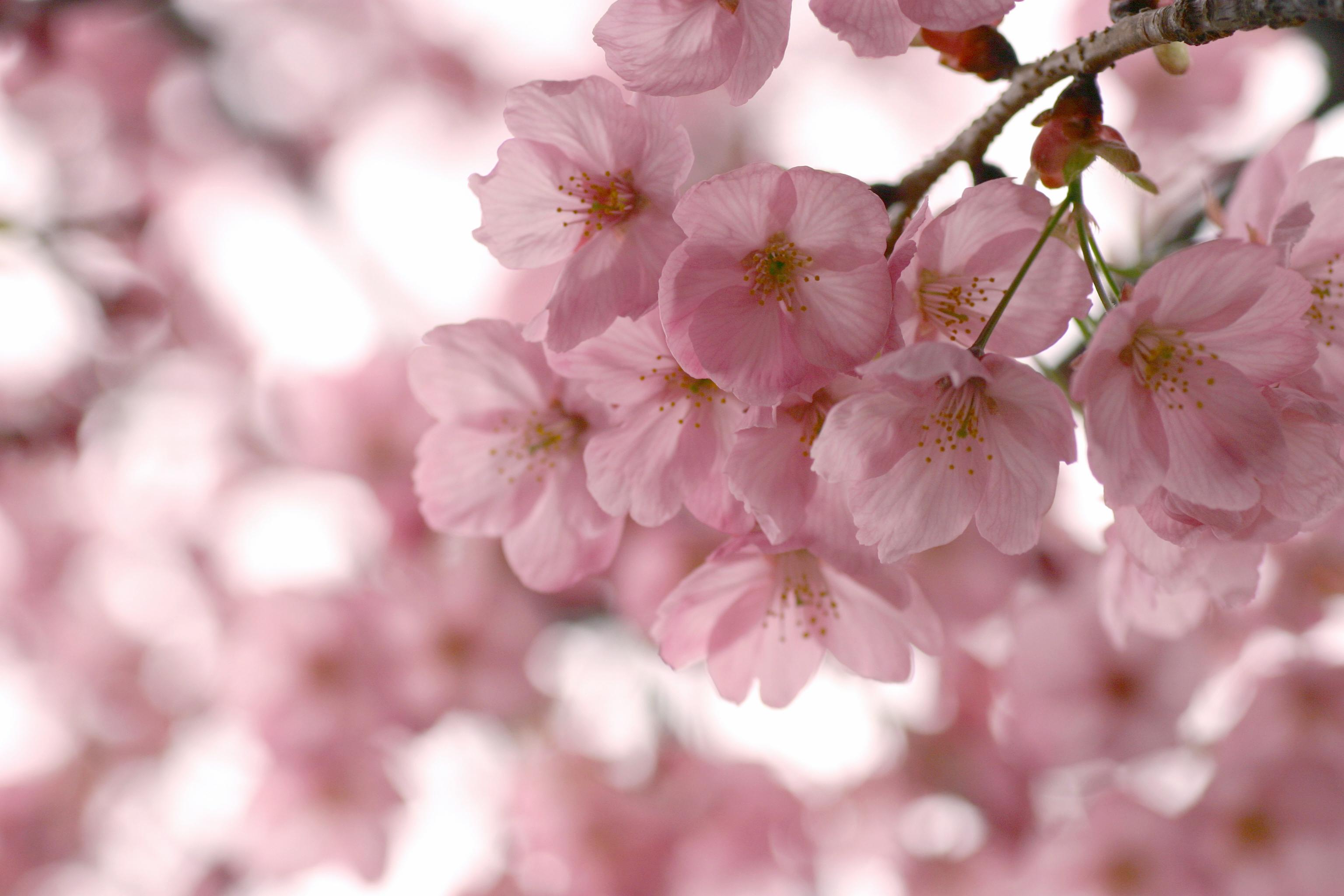 телефоны, режимы картинки весна на телефон в хорошем качестве новосибирске