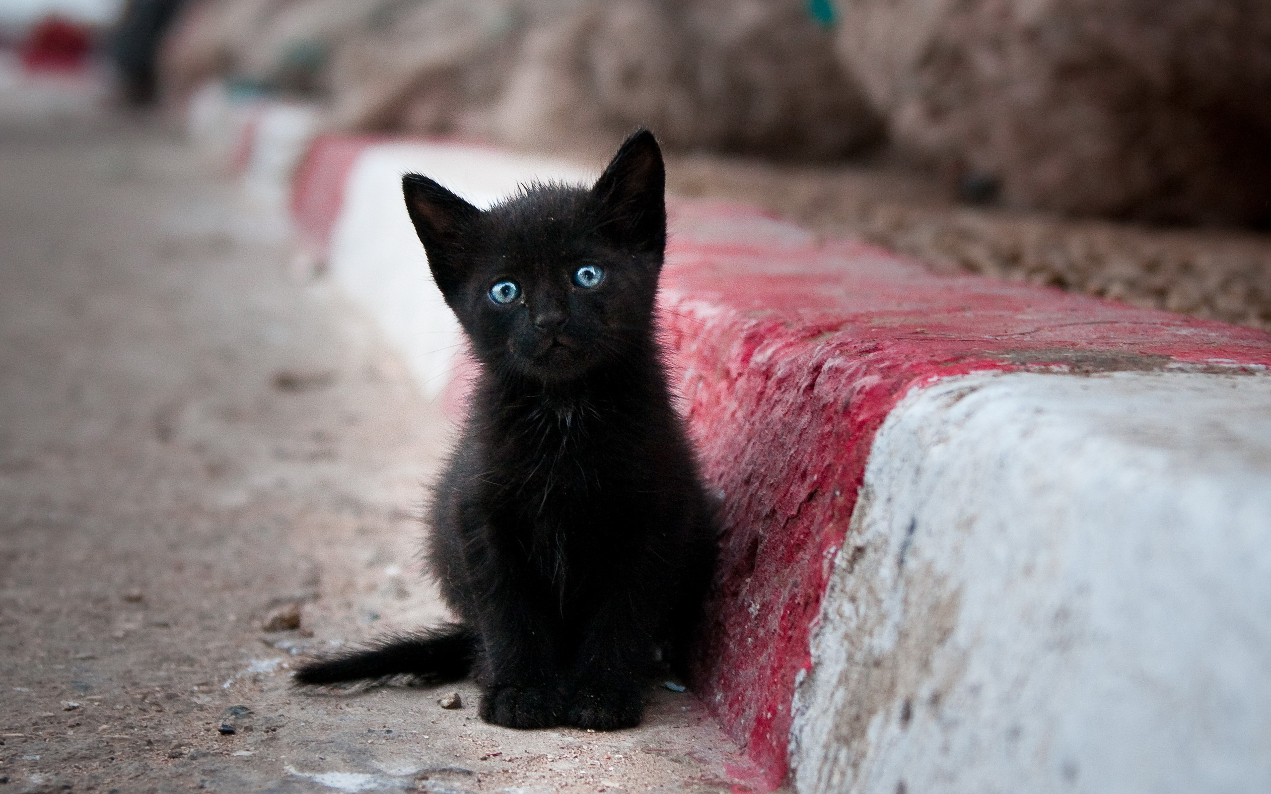Wallpaper  Sad little black cat with blue eyes