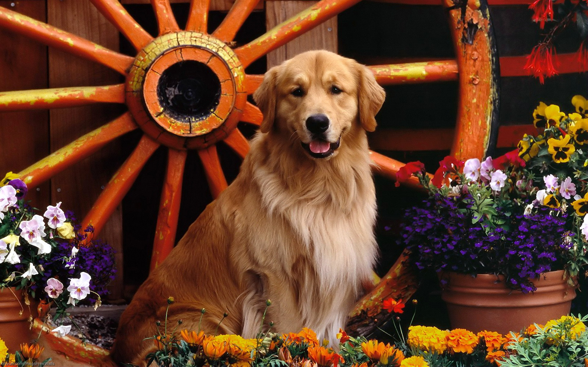 Wallpaper Retriever near the wheel