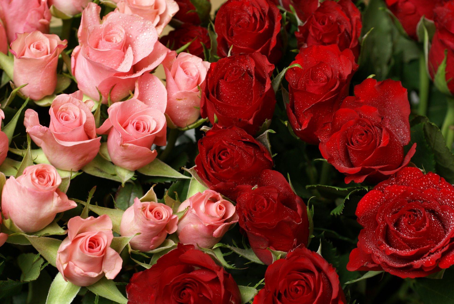 Открытки, картинки с розами фото