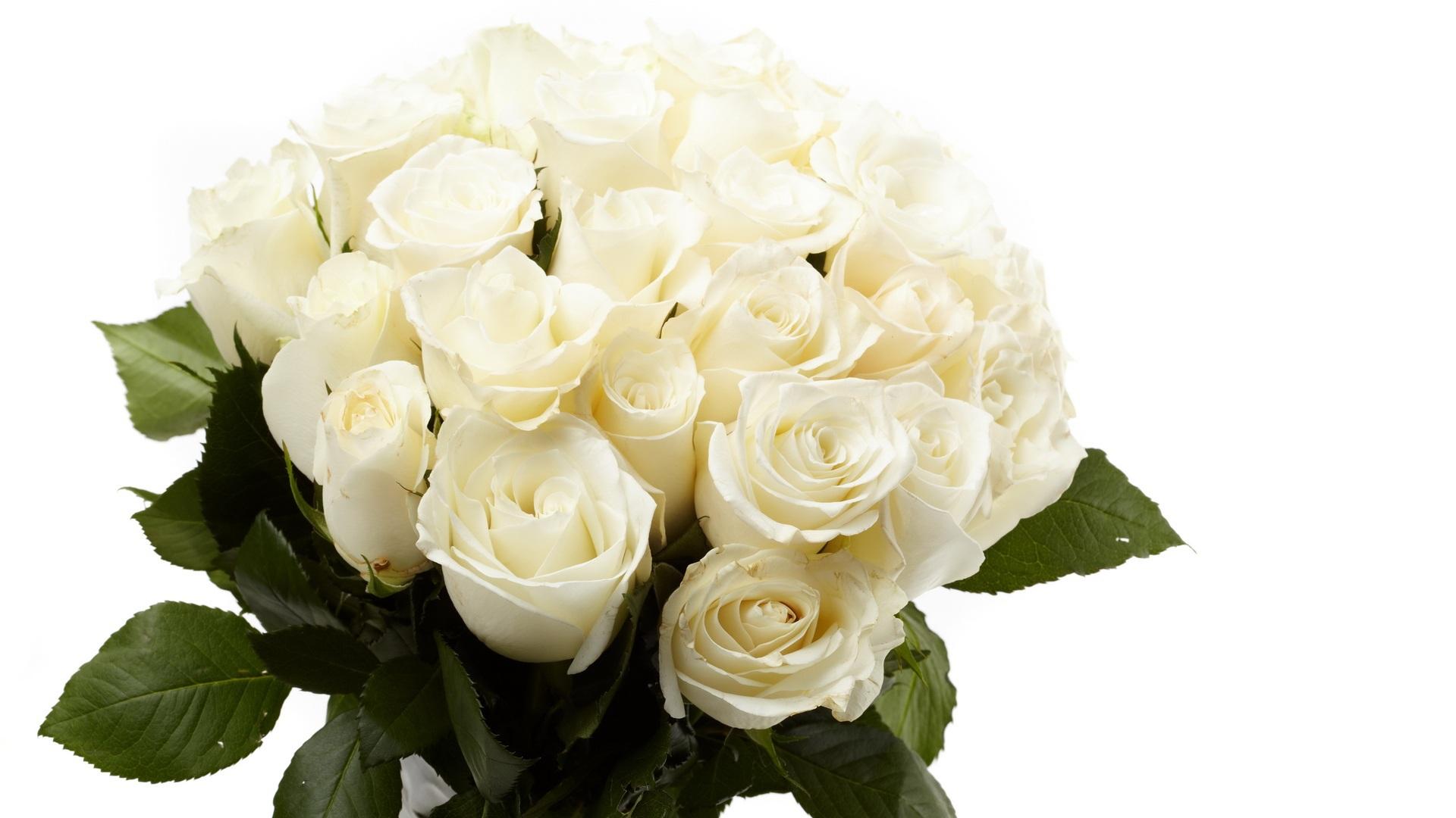 Самый красивый букет белых роз