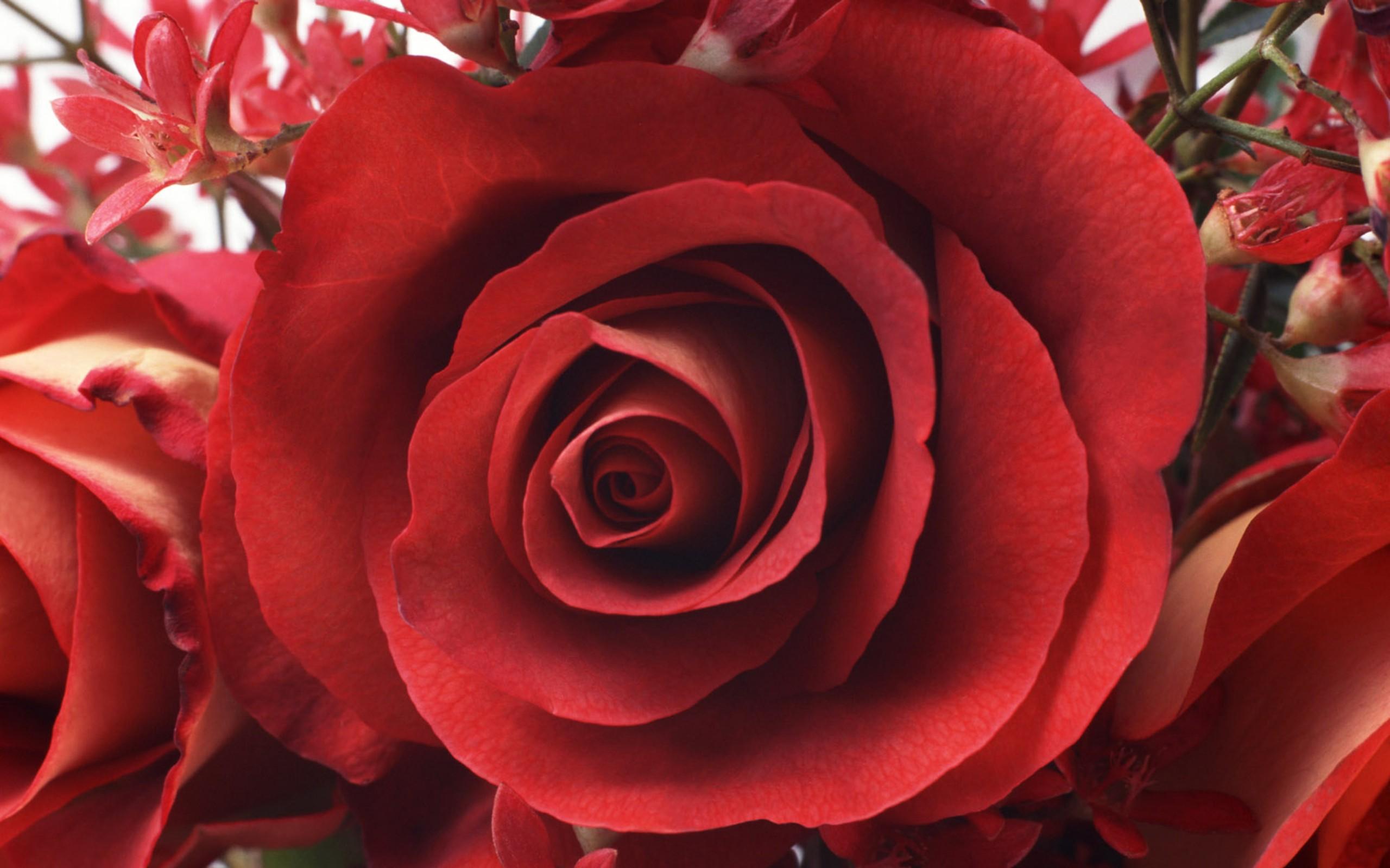 Картинке парню, розы на 8 марта картинки