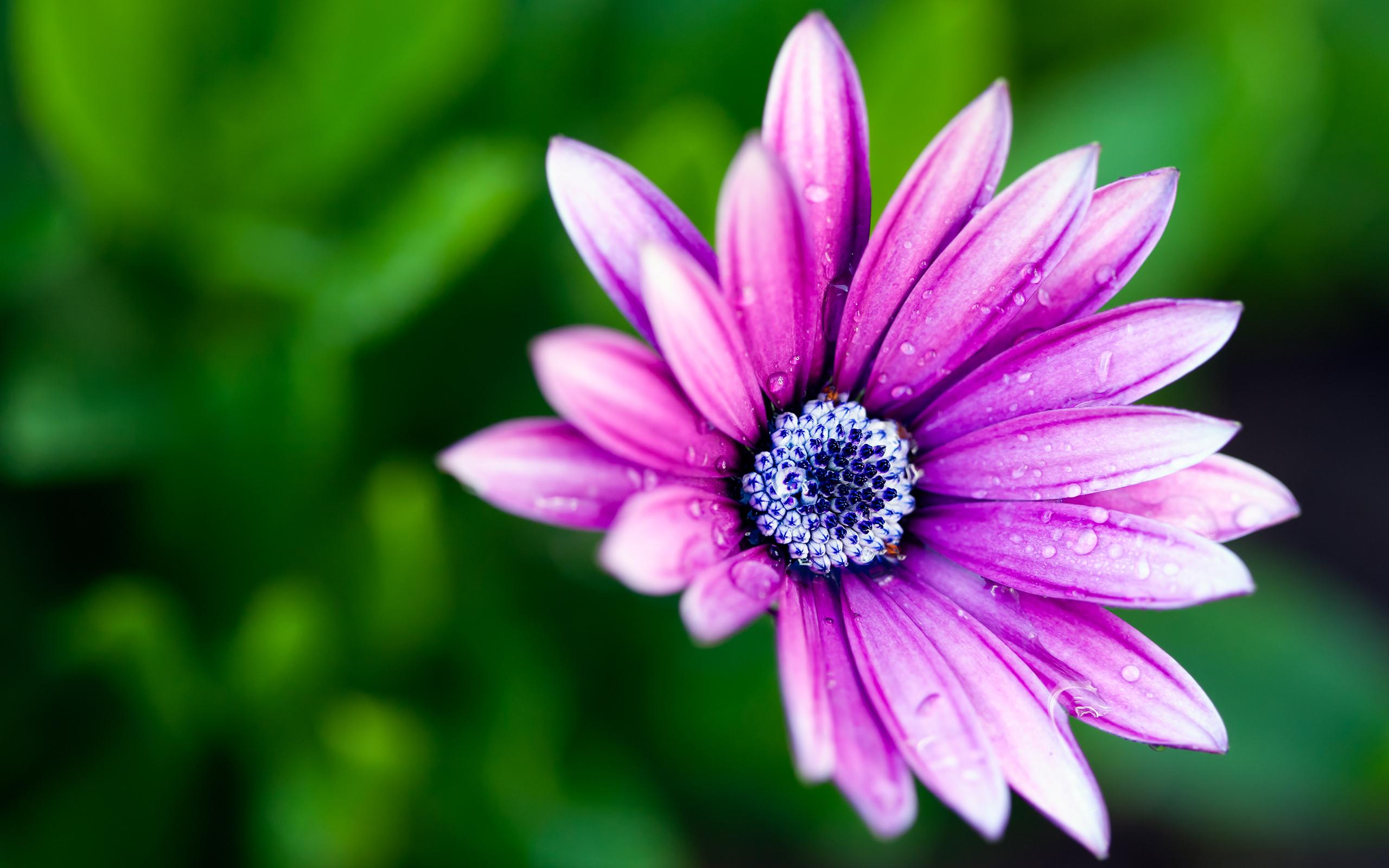 Обои На Телефон Андроид Красивые Цветы