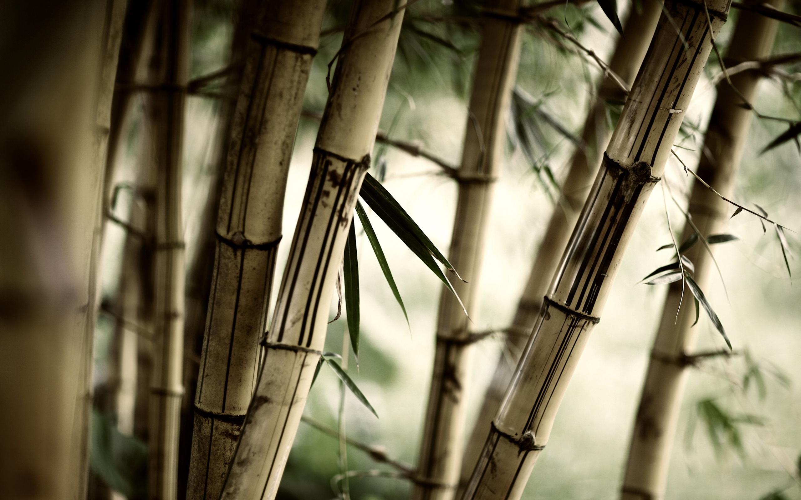 евгеньевич пошел картинки бамбук для телефона пожалели юношу выхлопотали