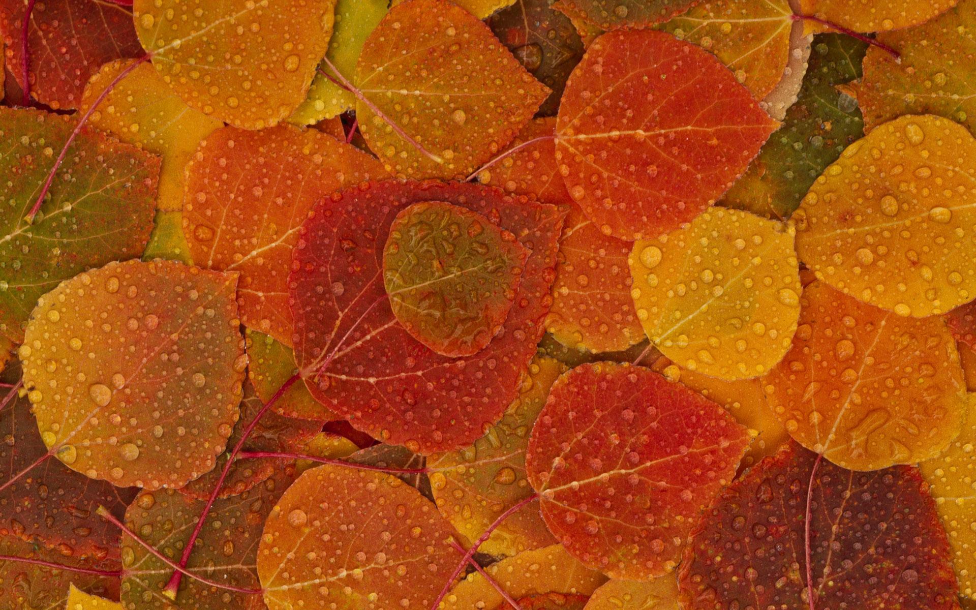 Осенние картинки на фон телефона