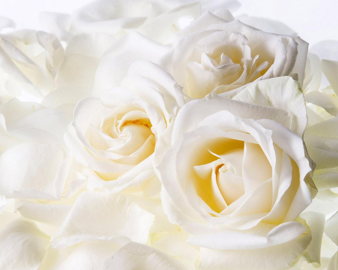 белые свадебный открытки осуществляем доставку всей