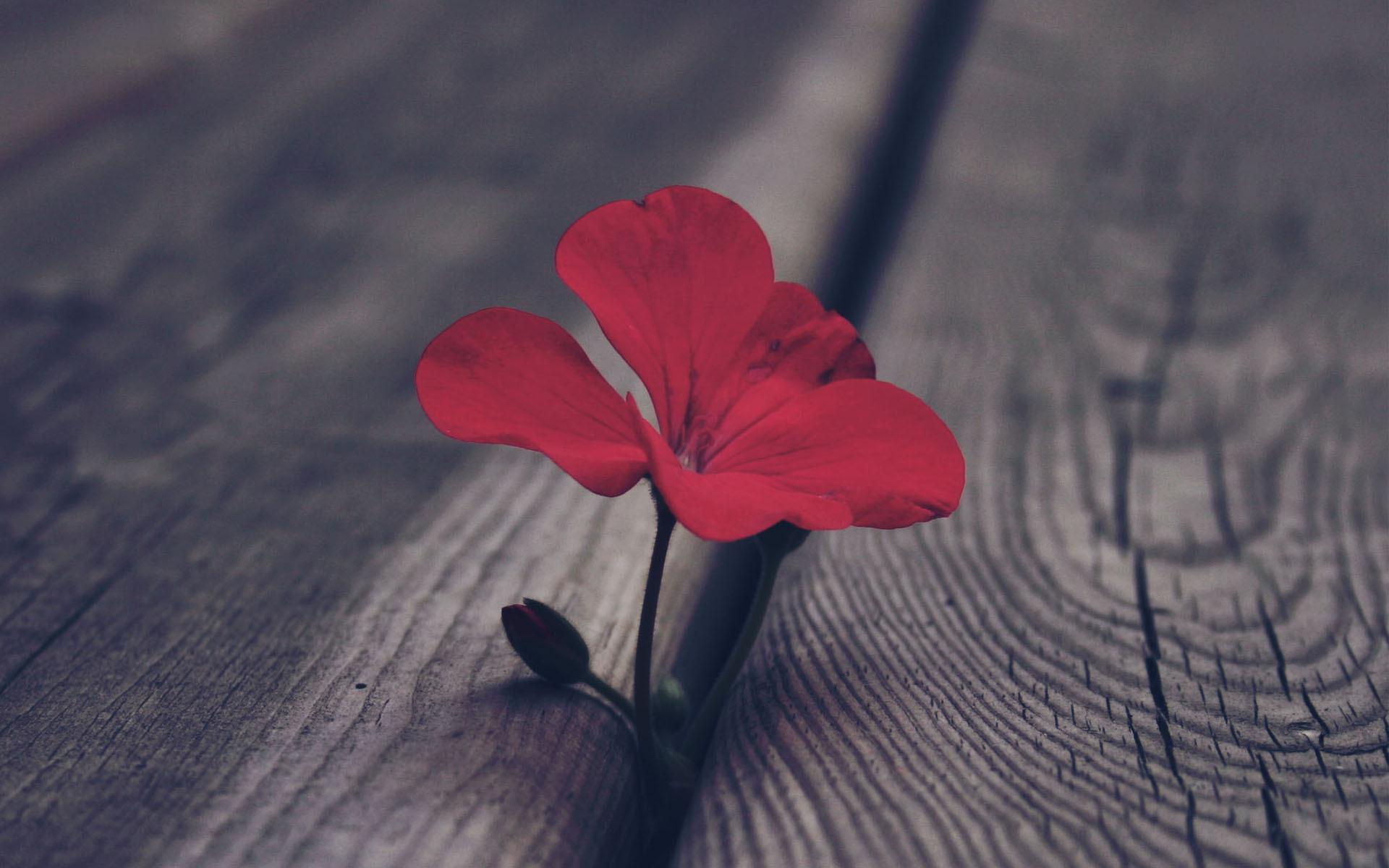 Открытки одинокого цветка