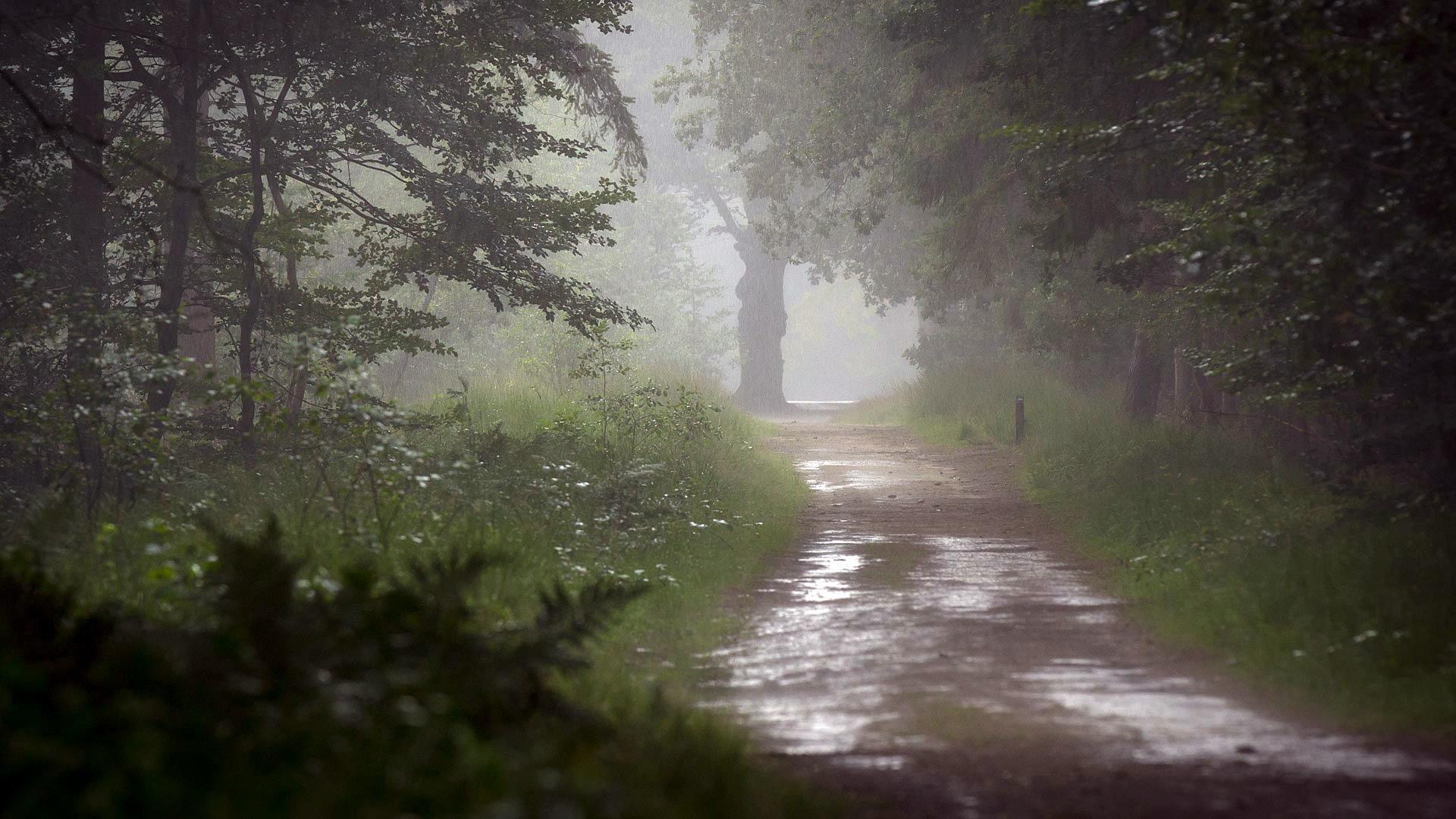 картинки на тему дождь в лесу где вытяжку купить