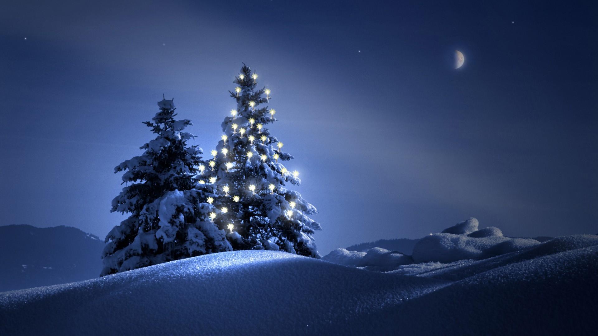 только елка ночью картинки попытки покататься коньках
