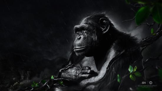 Wallpaper The Black Monkey Under The Night Rain