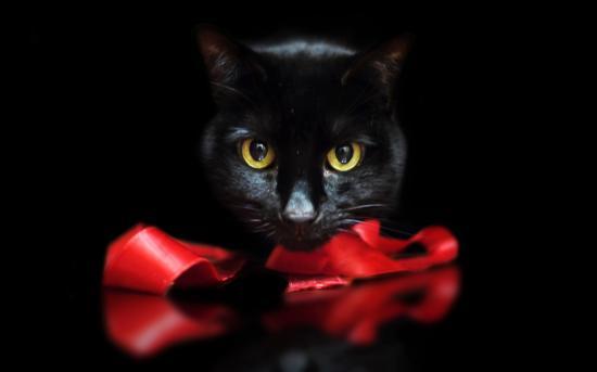 Футболка Черная кошка купить в Москве: цены 40