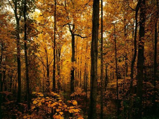 Ав осенний лес фото