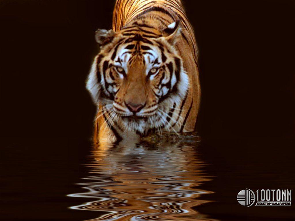 адаптирована картинки для телефона тигры одеть термобелье