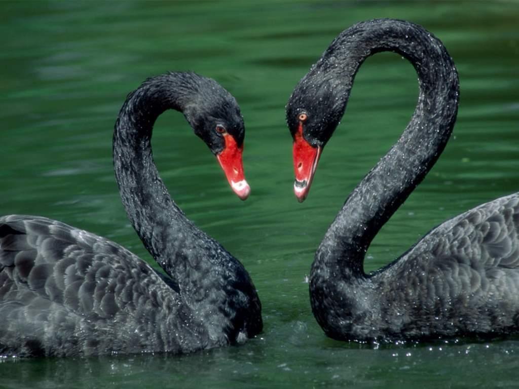 http://on-desktop.com/wps/Animals_Birds__001851_1.jpg