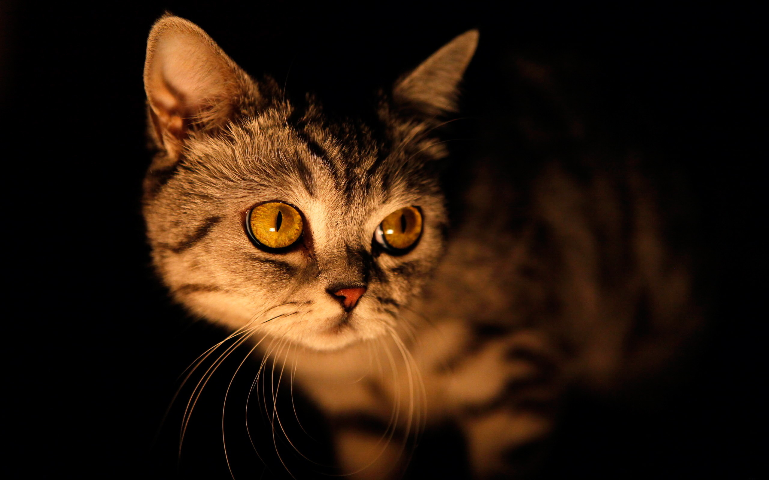луна кот обои на рабочий стол № 573637 бесплатно