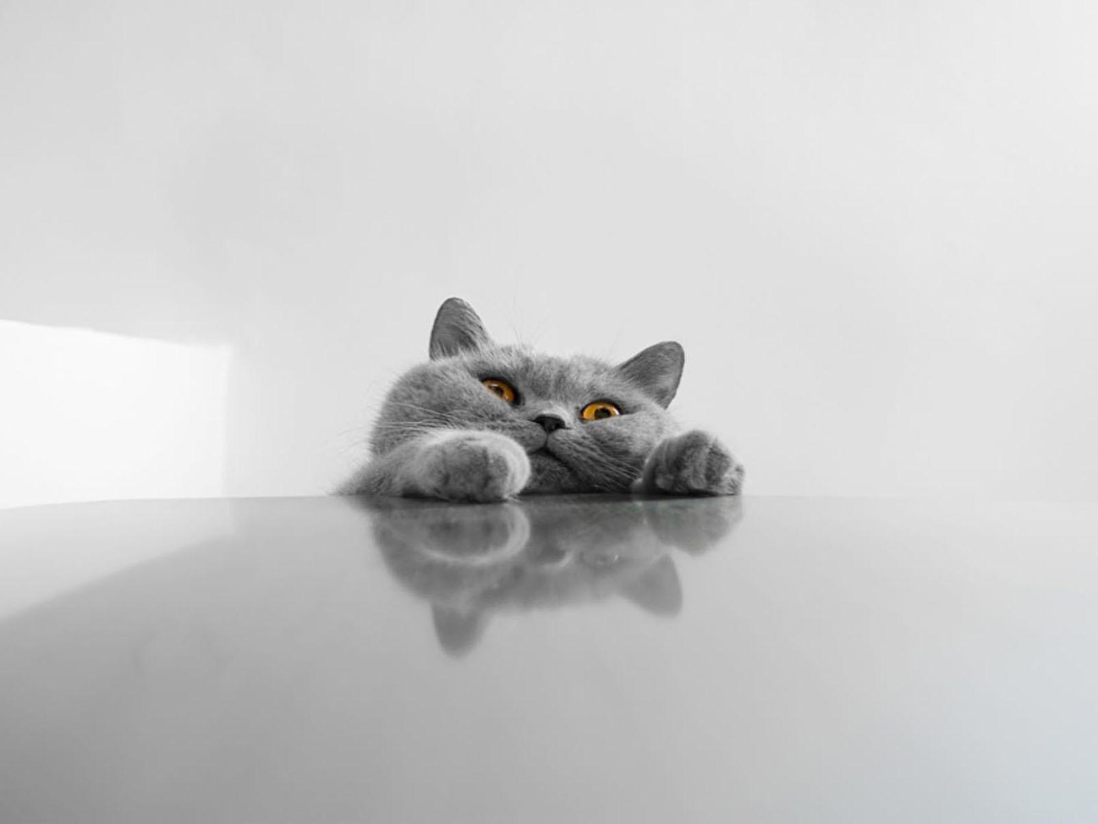 Обои на рабочий стол приколы кошек