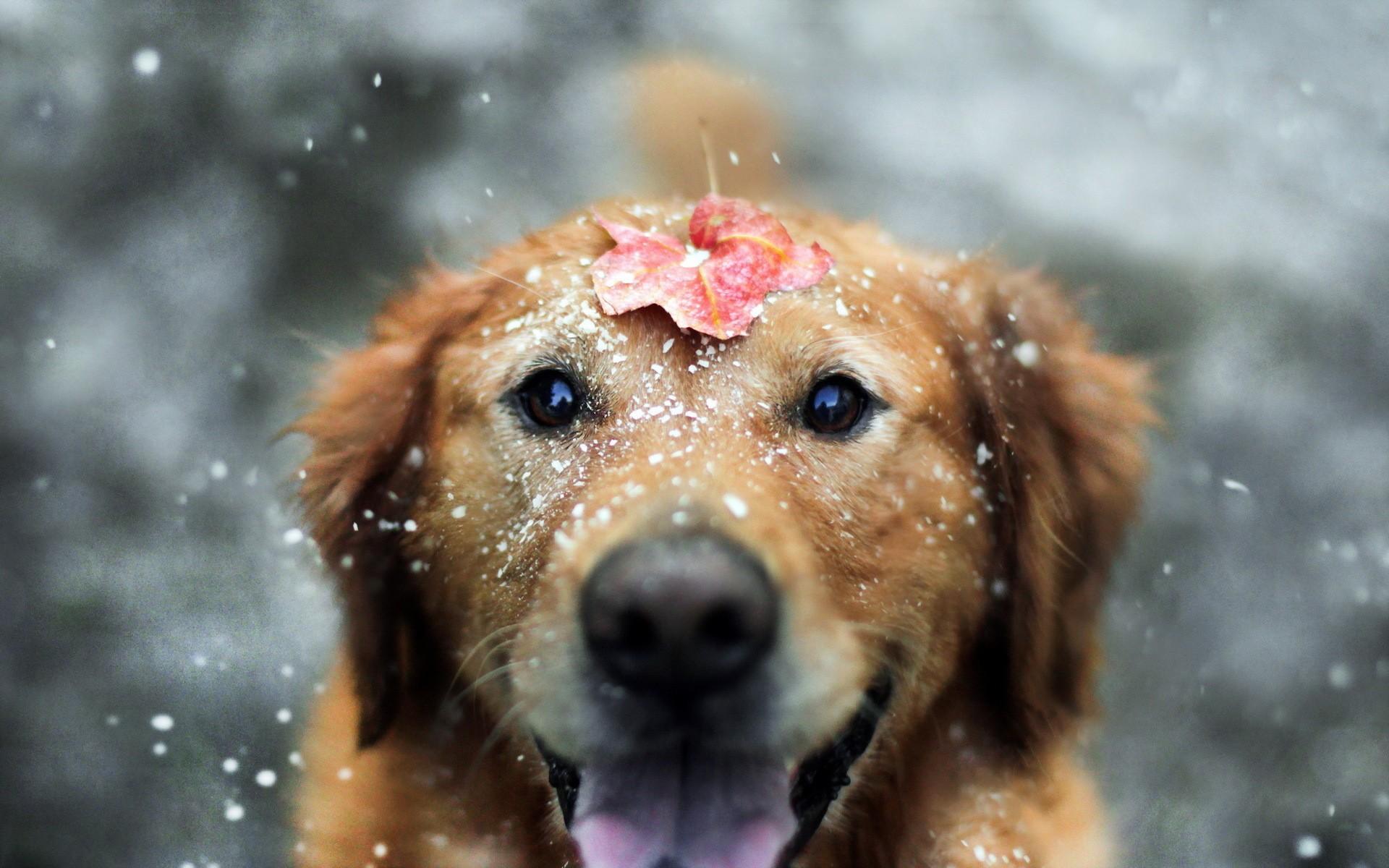 Обои для рабочего стола собака снег