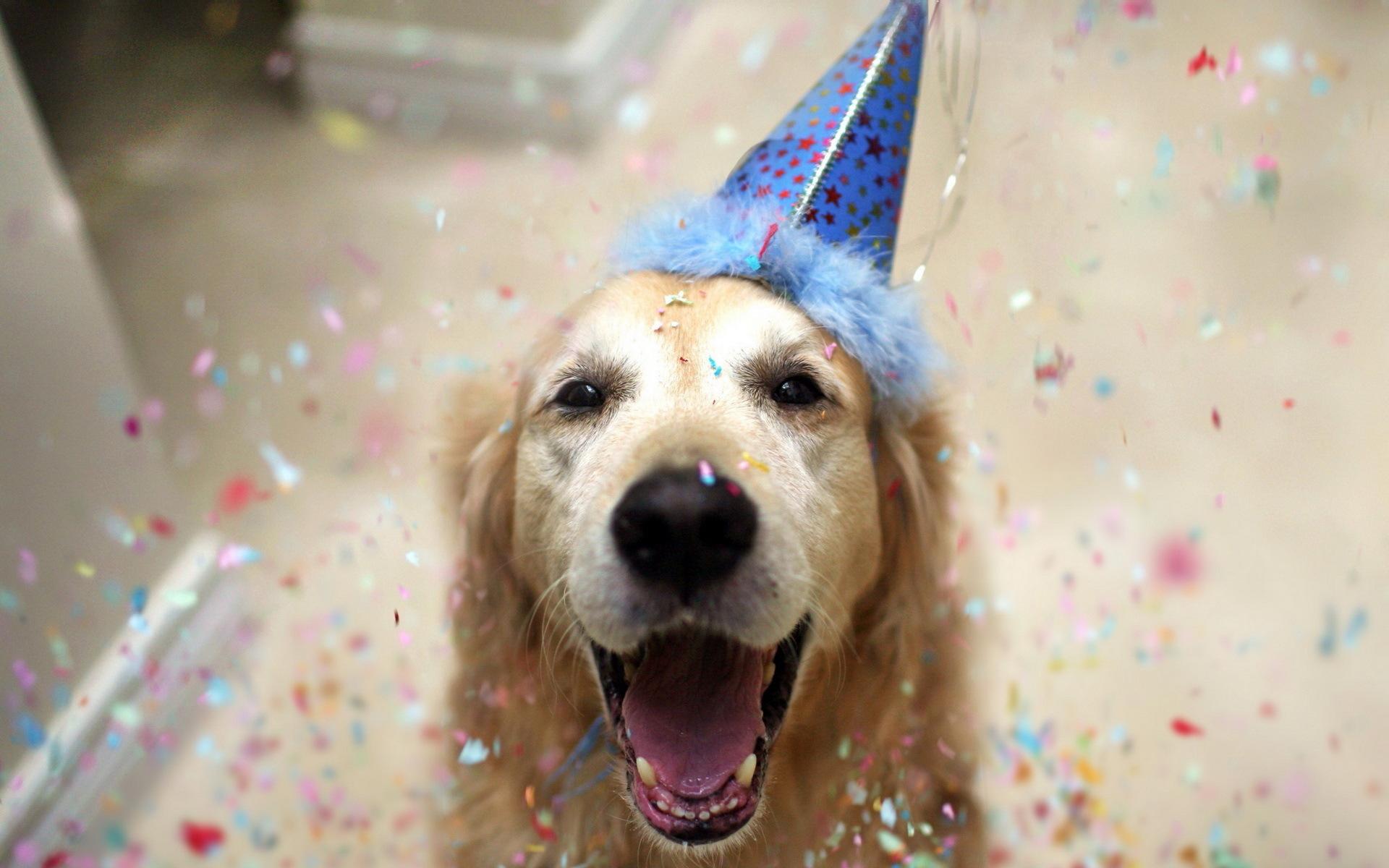 С днем рождения собака в колпаке