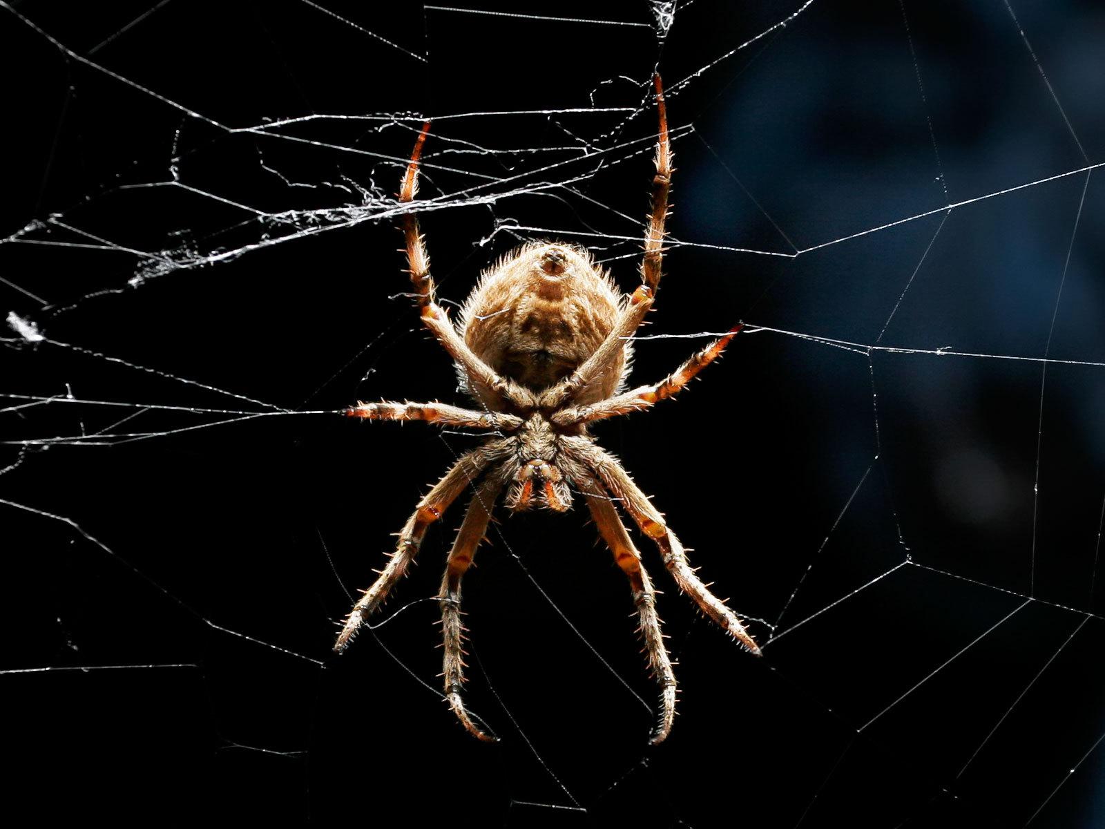 этого параметра приметы паук на теле ходит самом деле