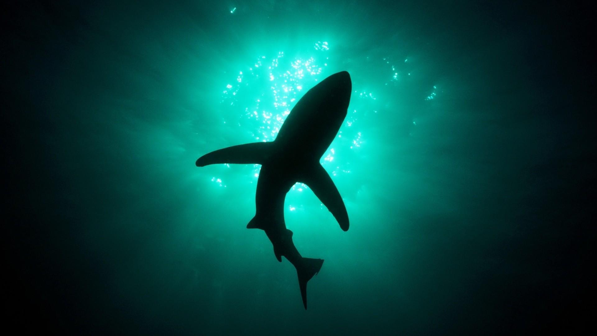 Обои на рабочий стол 1680х1050 акулы