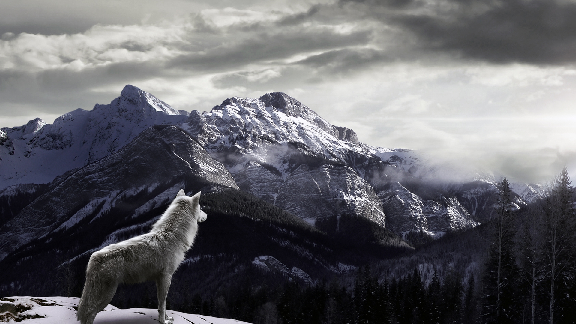 http://on-desktop.com/wps/Animals___Wolves_and_Foxes_The_wolf_in_the_mountains_089631_.jpg