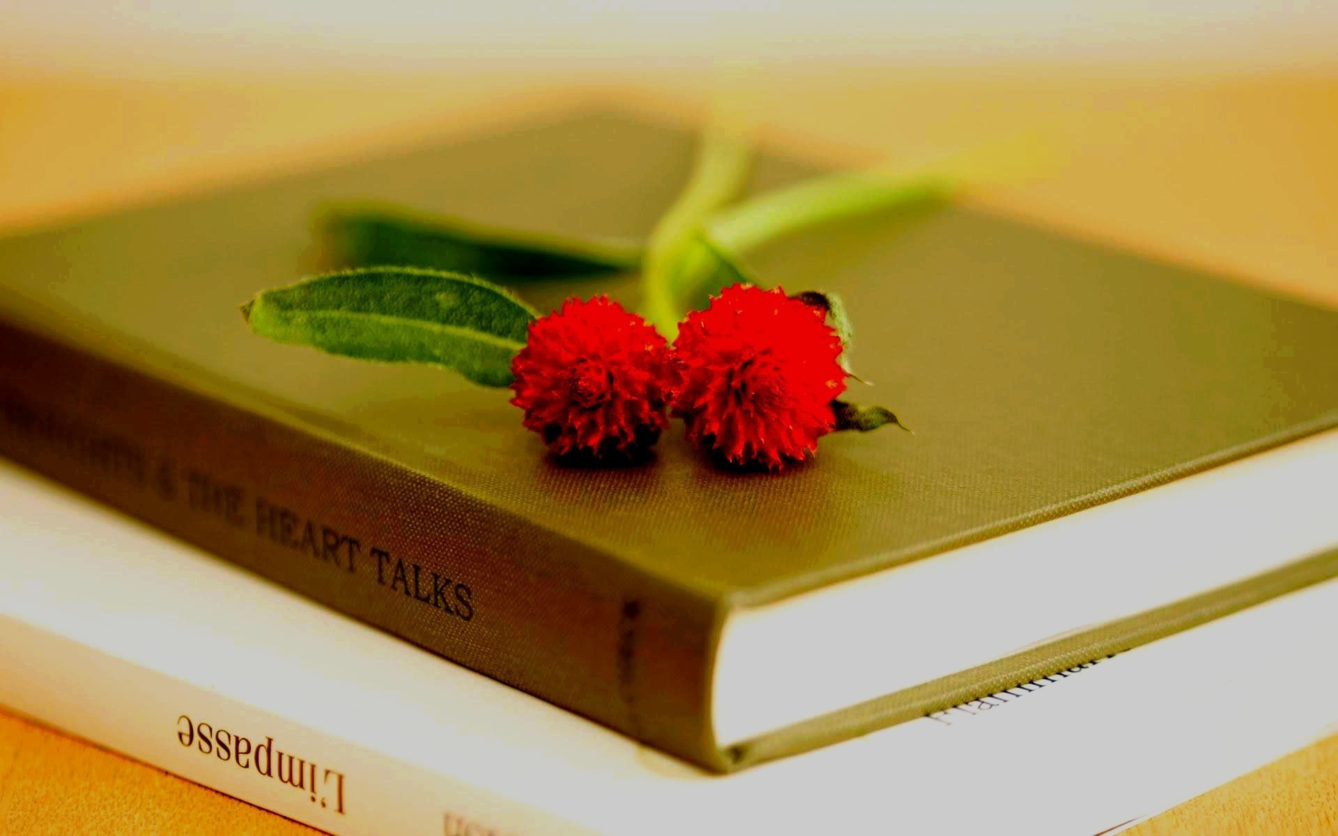 обои на рабочий стол цветы книги № 648800  скачать