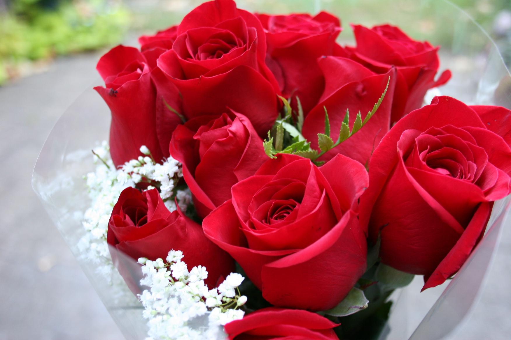 Самые красивые розы цветы