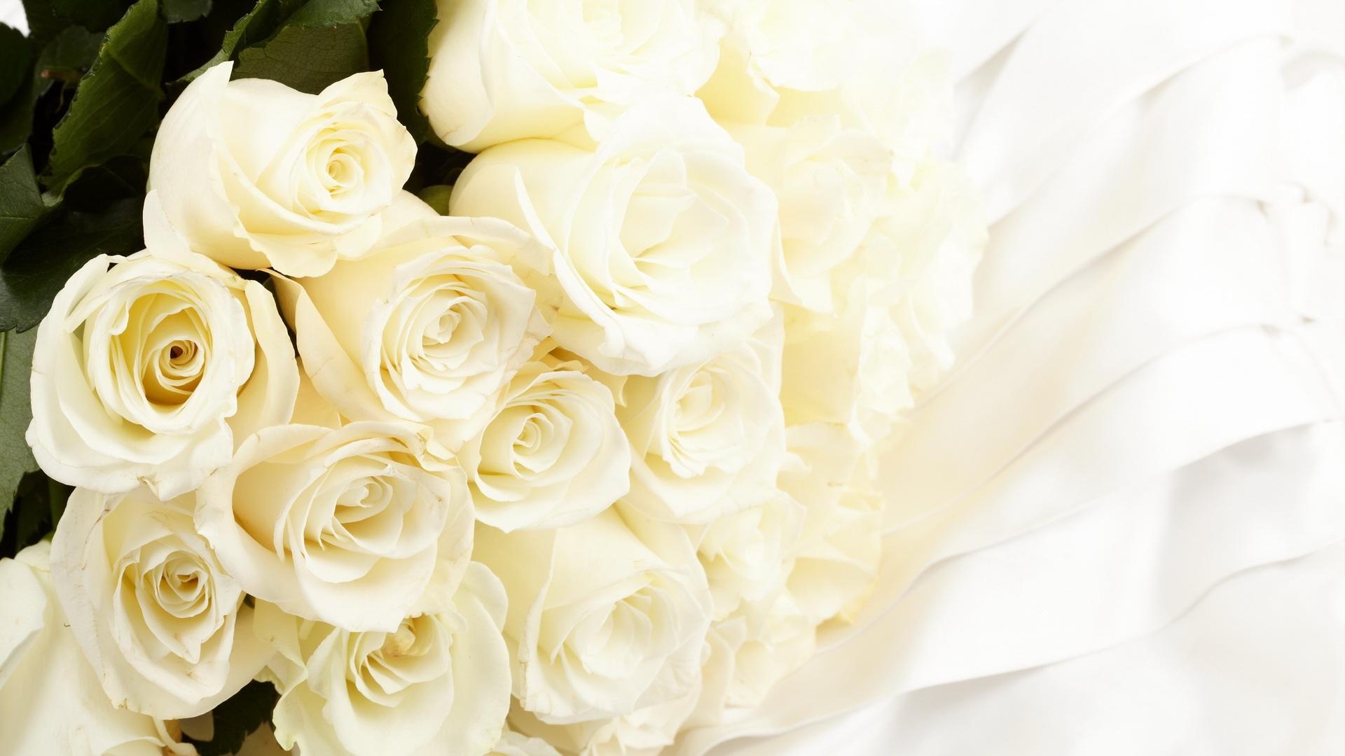 бежевые розы обои на рабочий стол № 51785 бесплатно