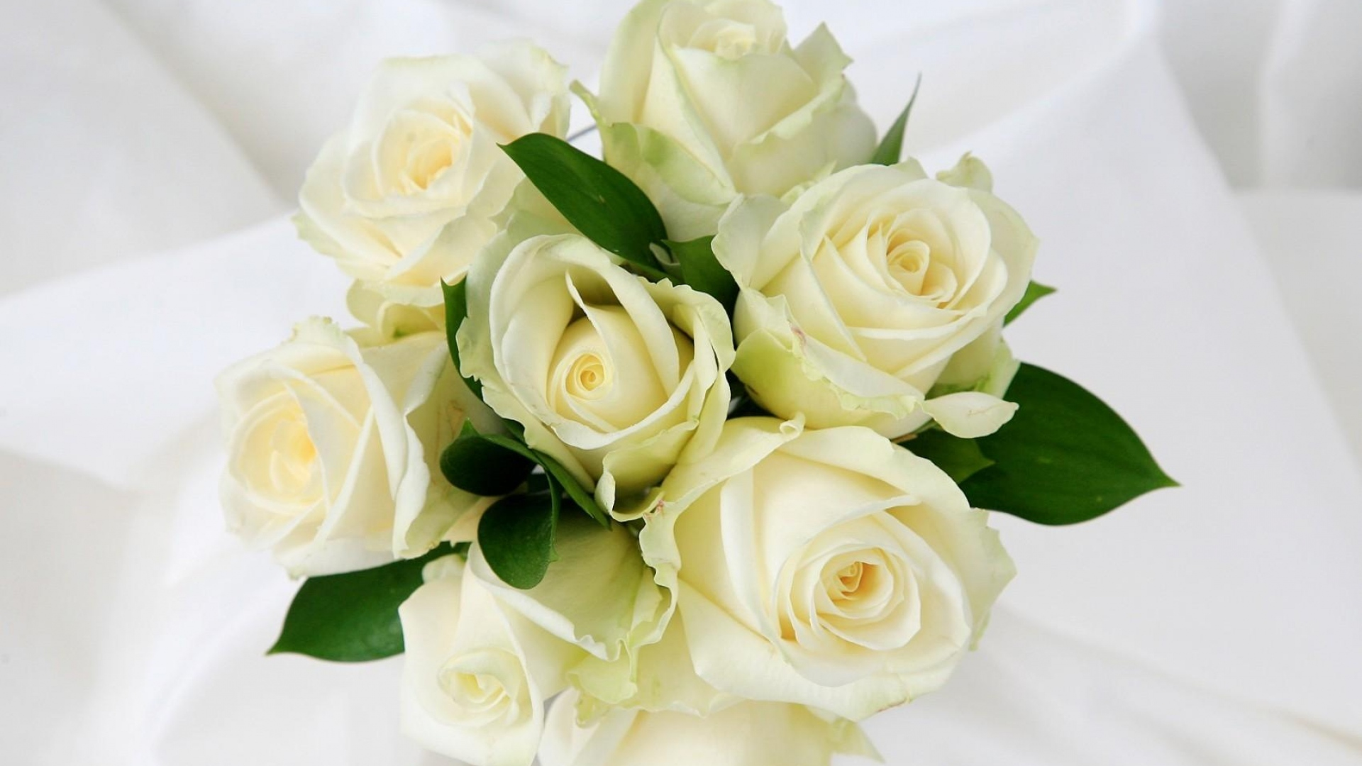 Цветы розы красивые на белом