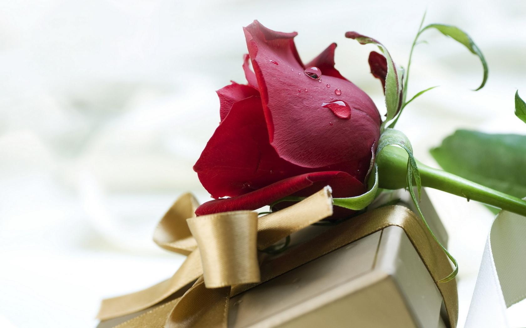 Подарки фото картинки цветы dk