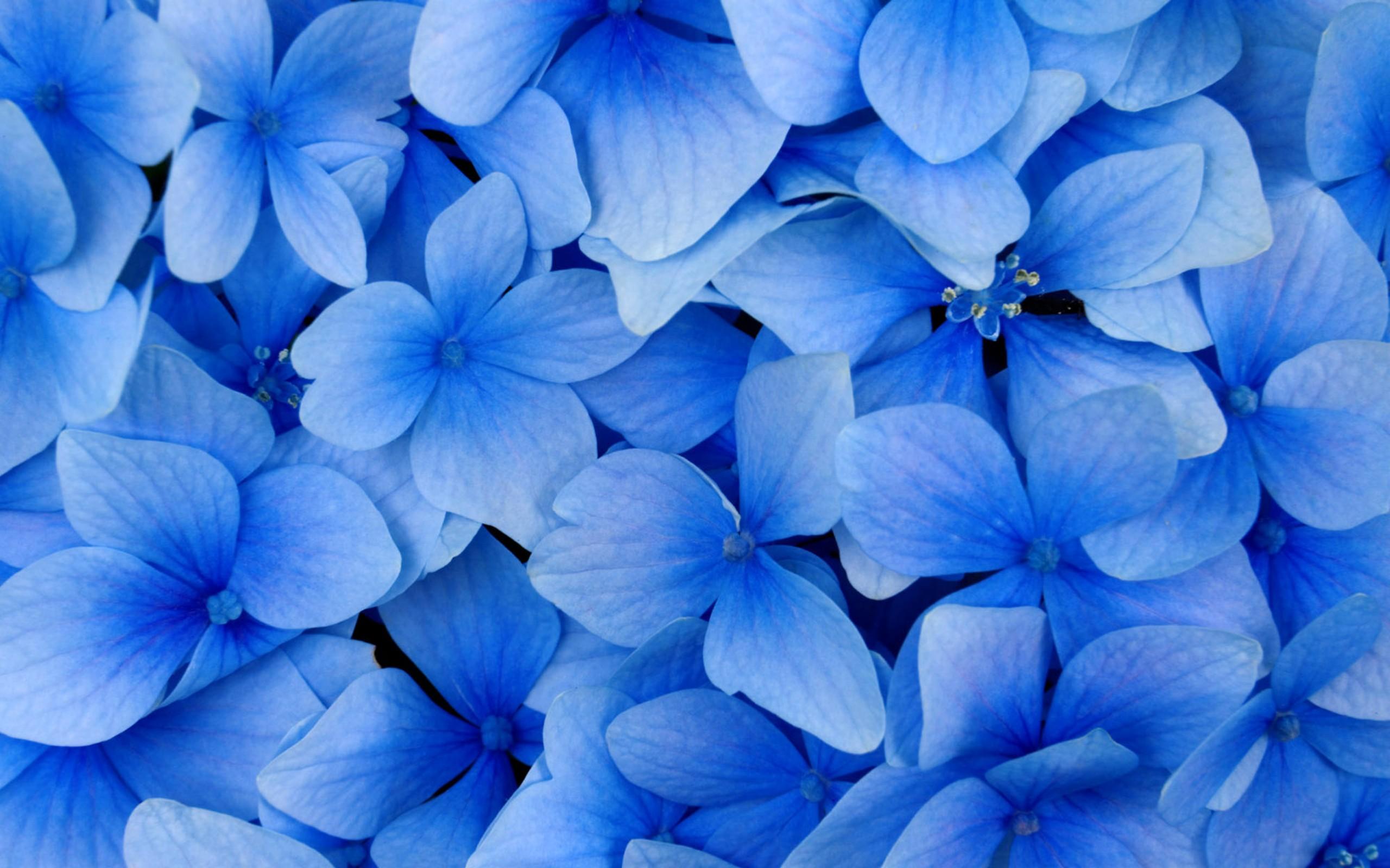 Красивые цветы синего цвета