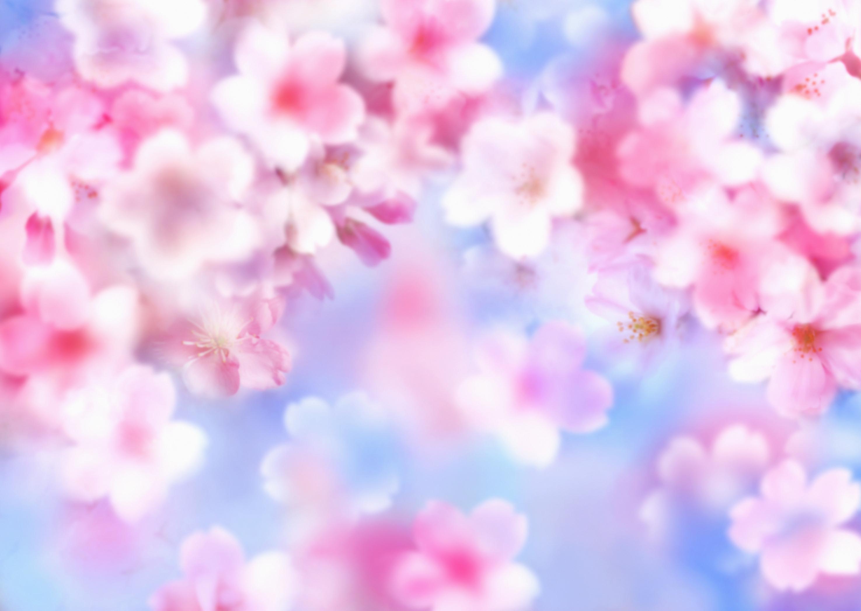 Цветы на фоне