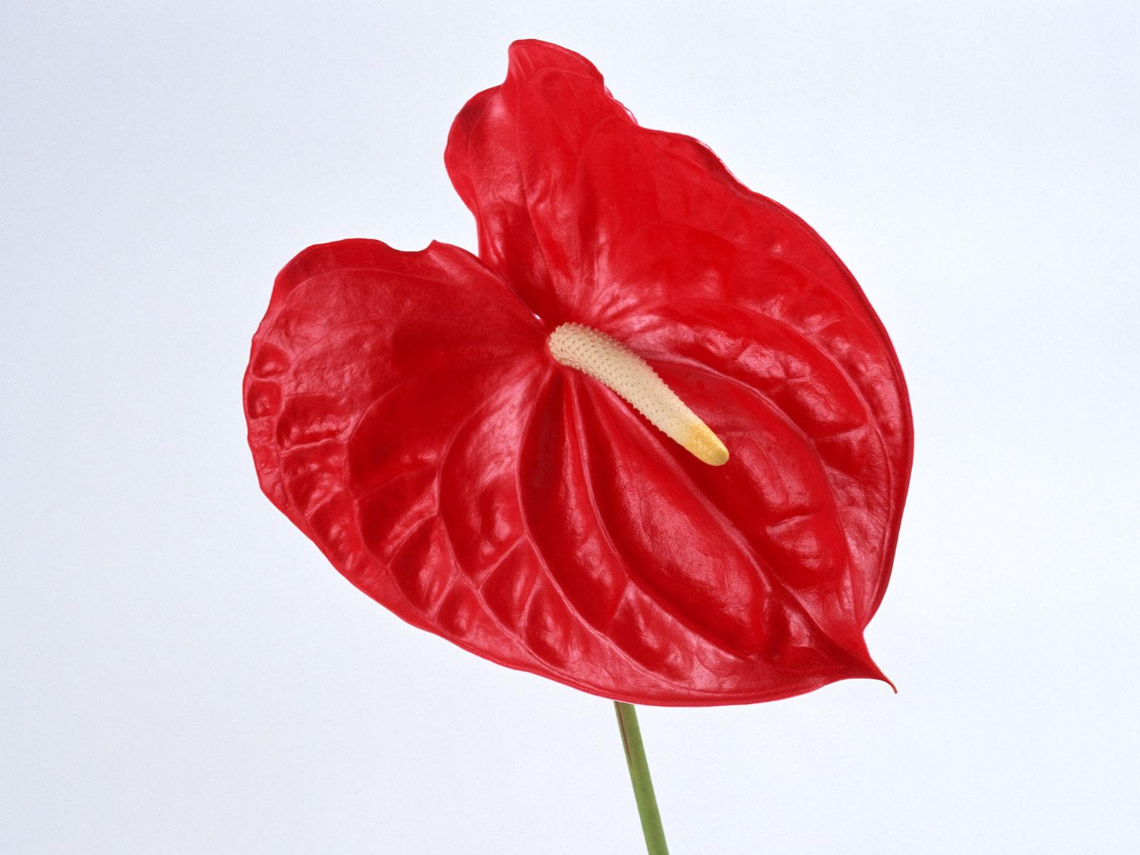 Цветы с красными цветами