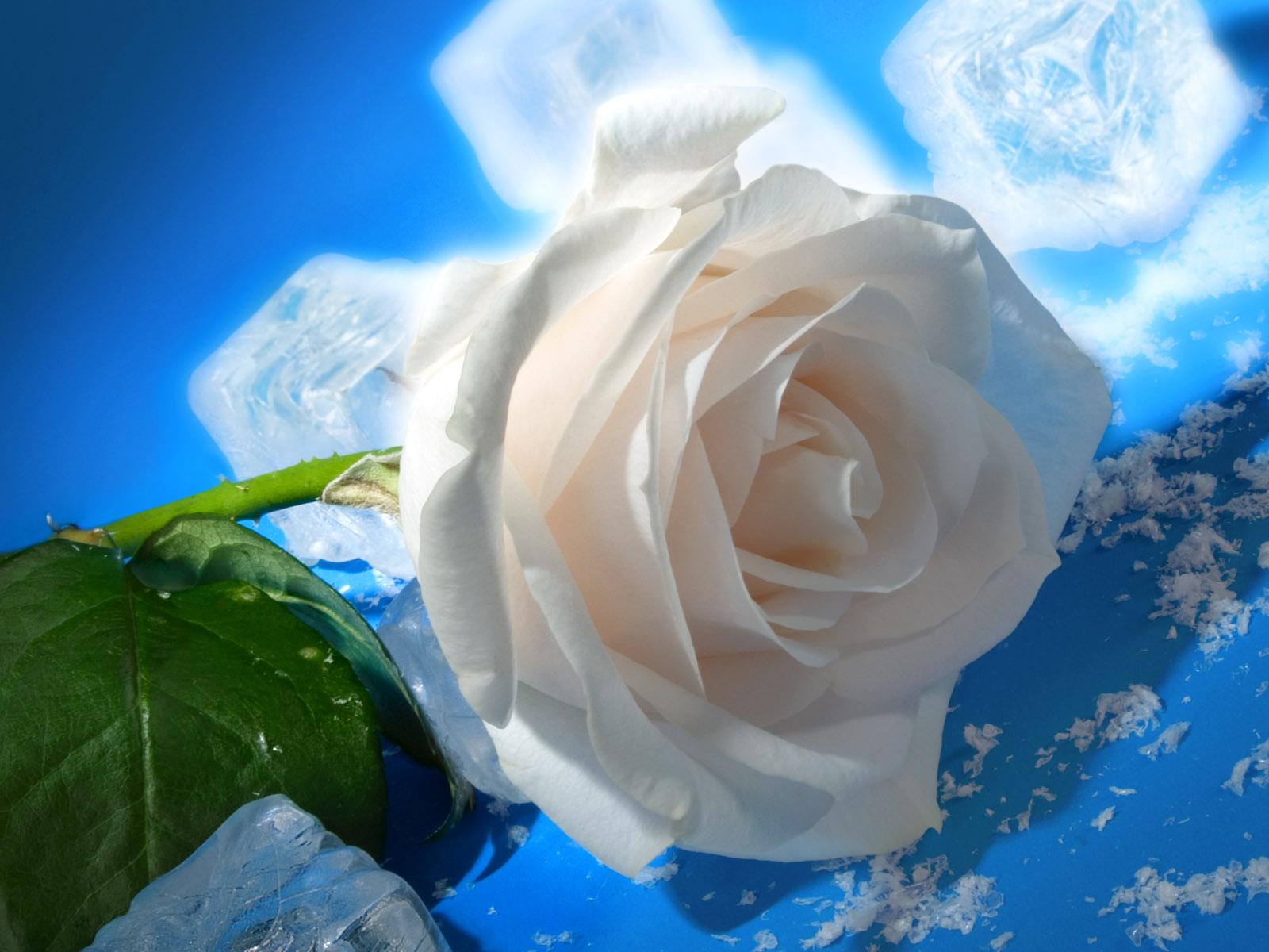 Фото самых красивых белых цветов