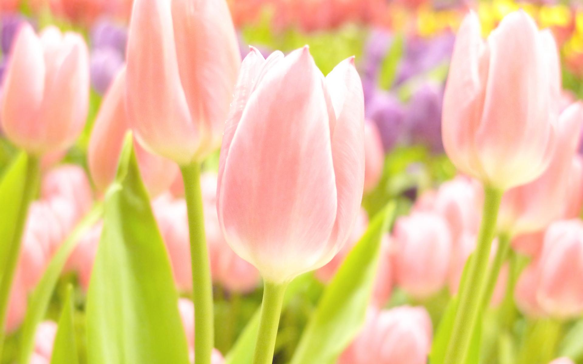 Весна обои на стол картинки красивые