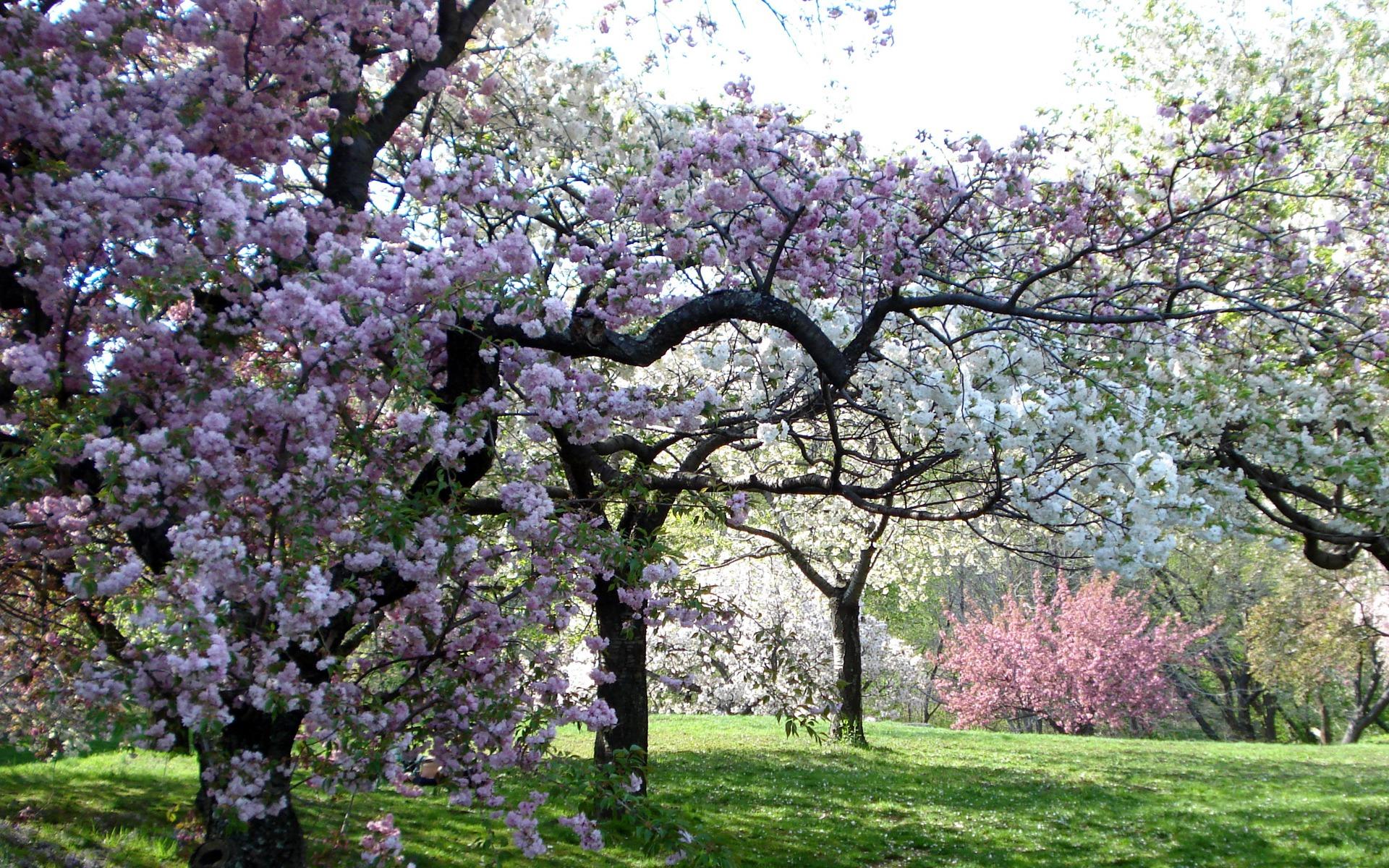 Весна в саду обои на стол