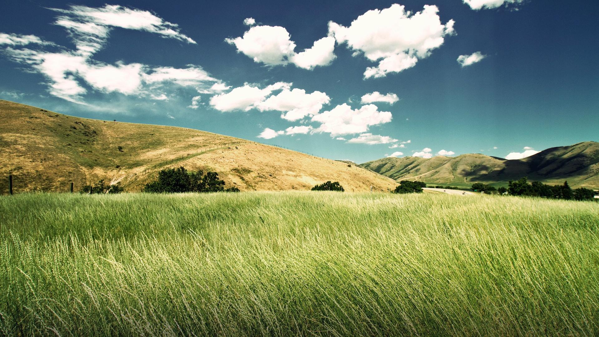 поле травы обои на рабочий стол № 31458 без смс