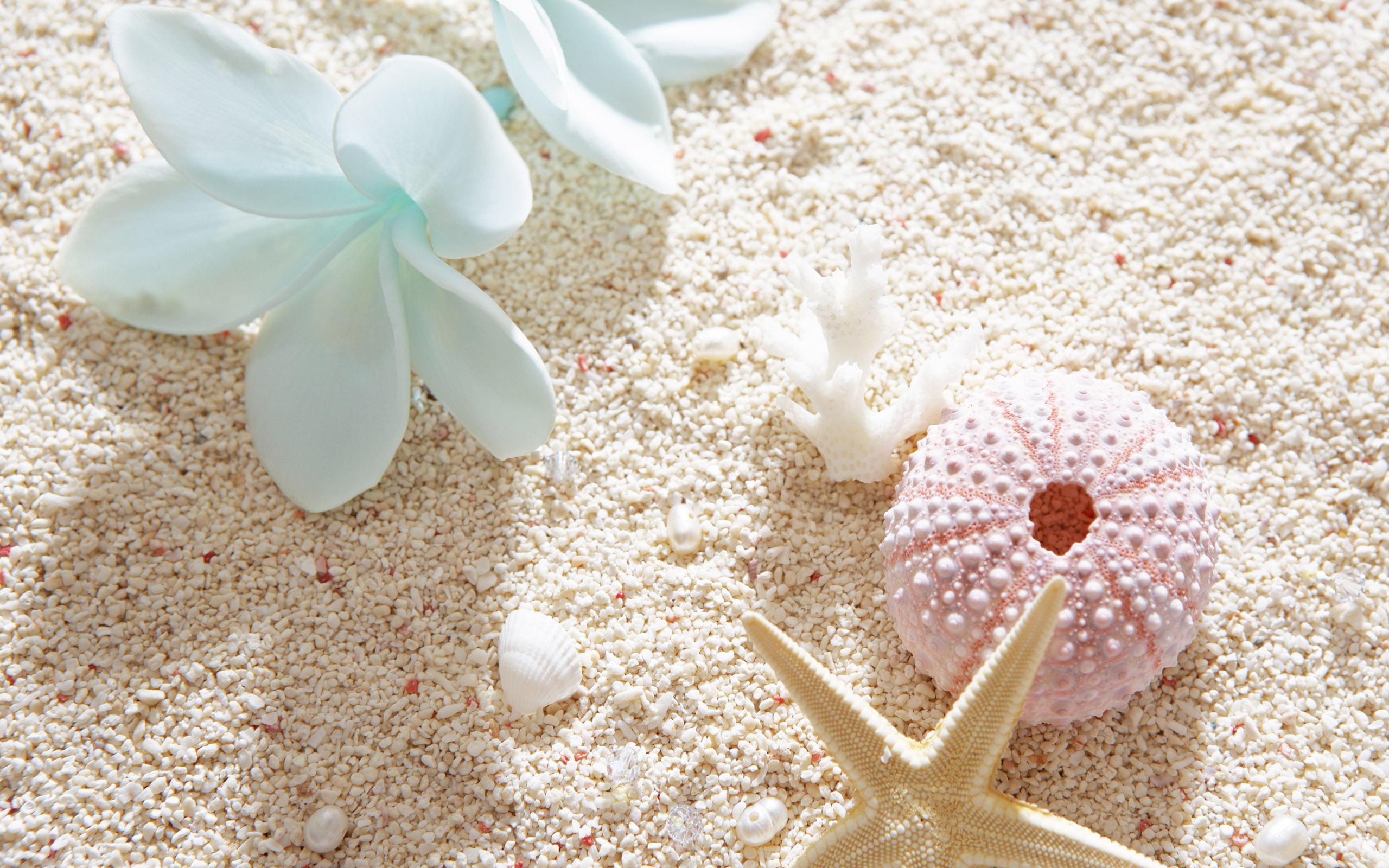 обои для рабочего стола морской песок № 833513 без смс