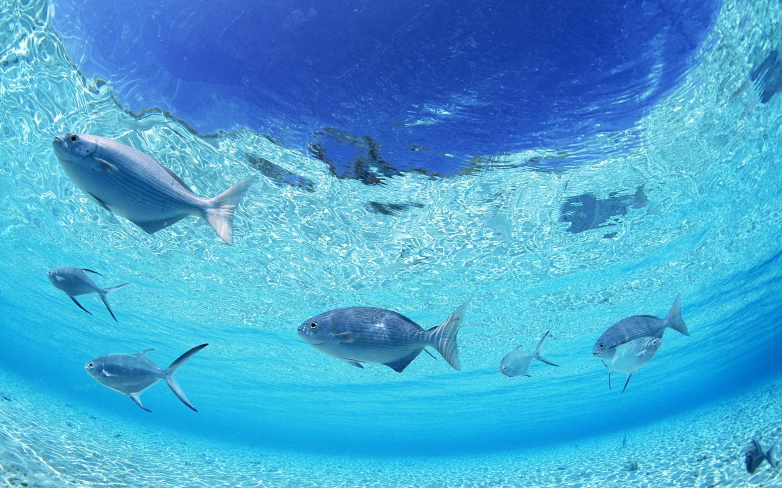 Beautiful sea fish wallpaper