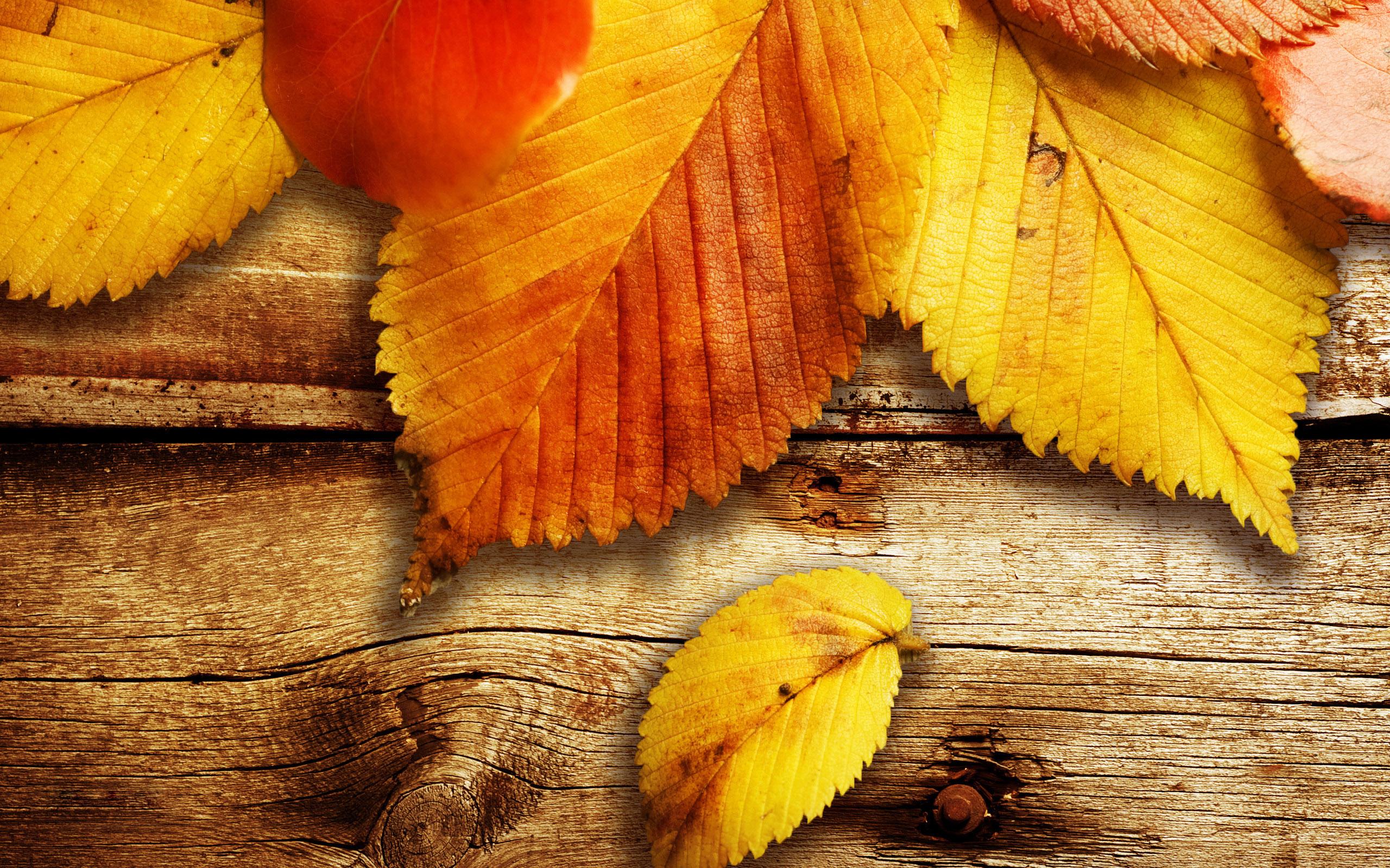Фон осень обои на рабочий стол