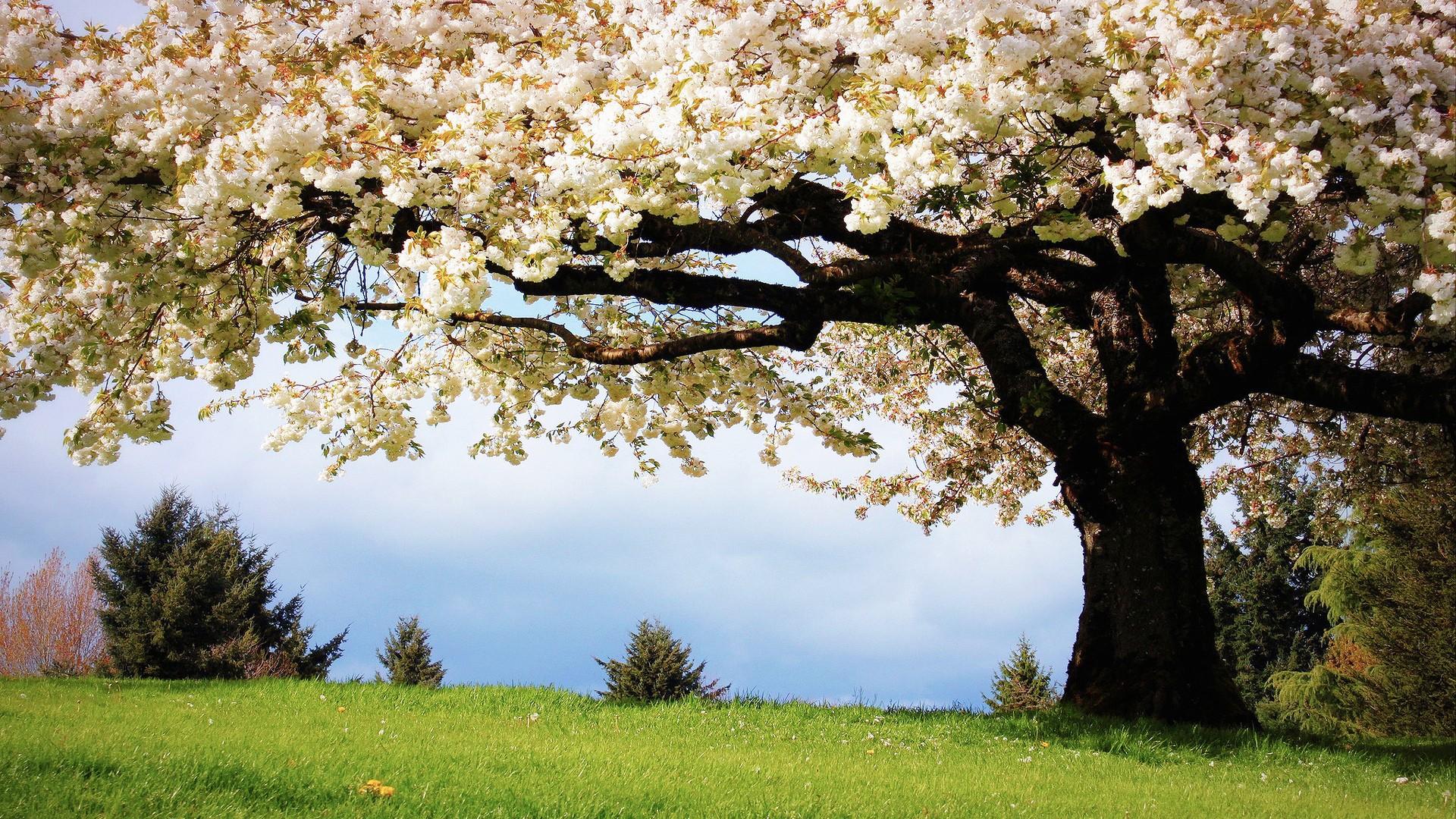Весна фото обои на рабочий стол