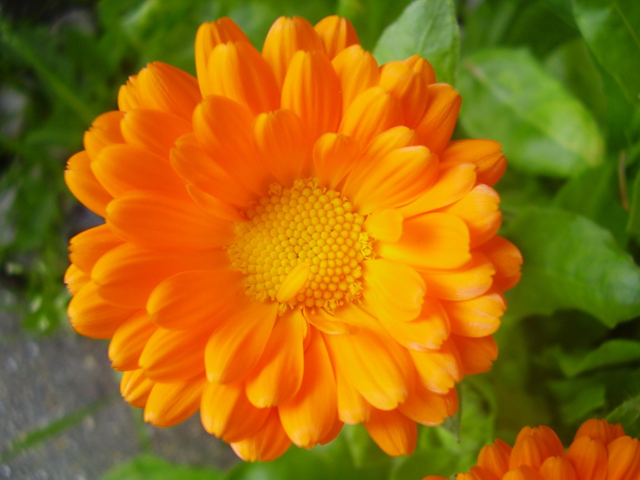 Комнатные растения: фото с названиями. Фотографии 26