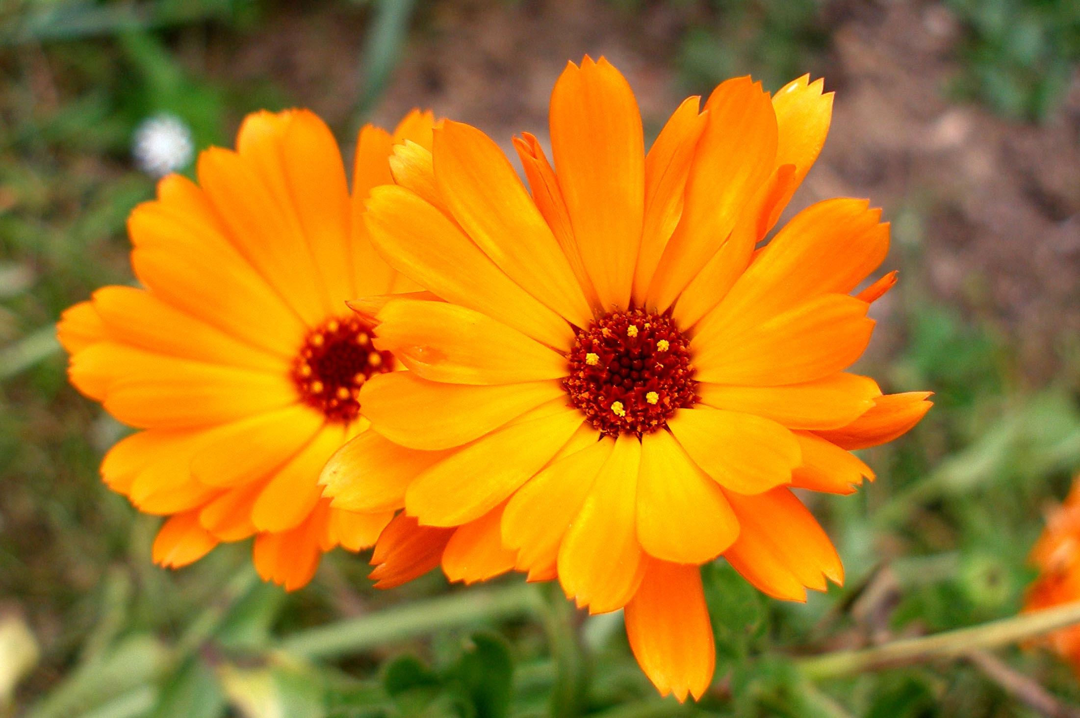 Комнатные растения: фото с названиями. Фотографии 40