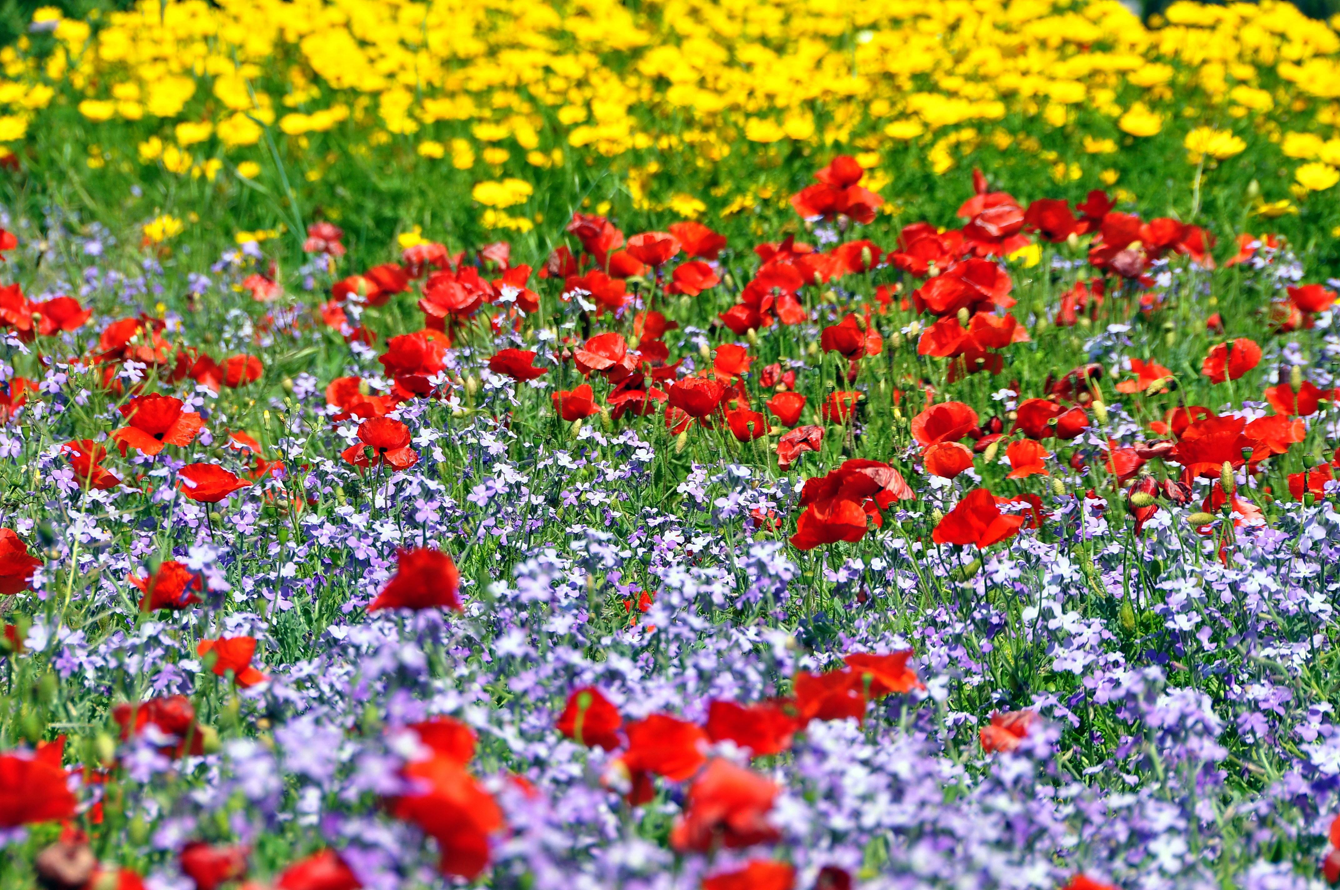ТОП-7 самых красивых цветущих долин мира фото цветочных 64