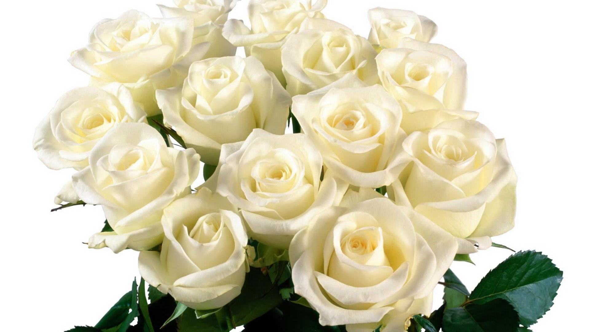 Белый день поздравление с днем рождения